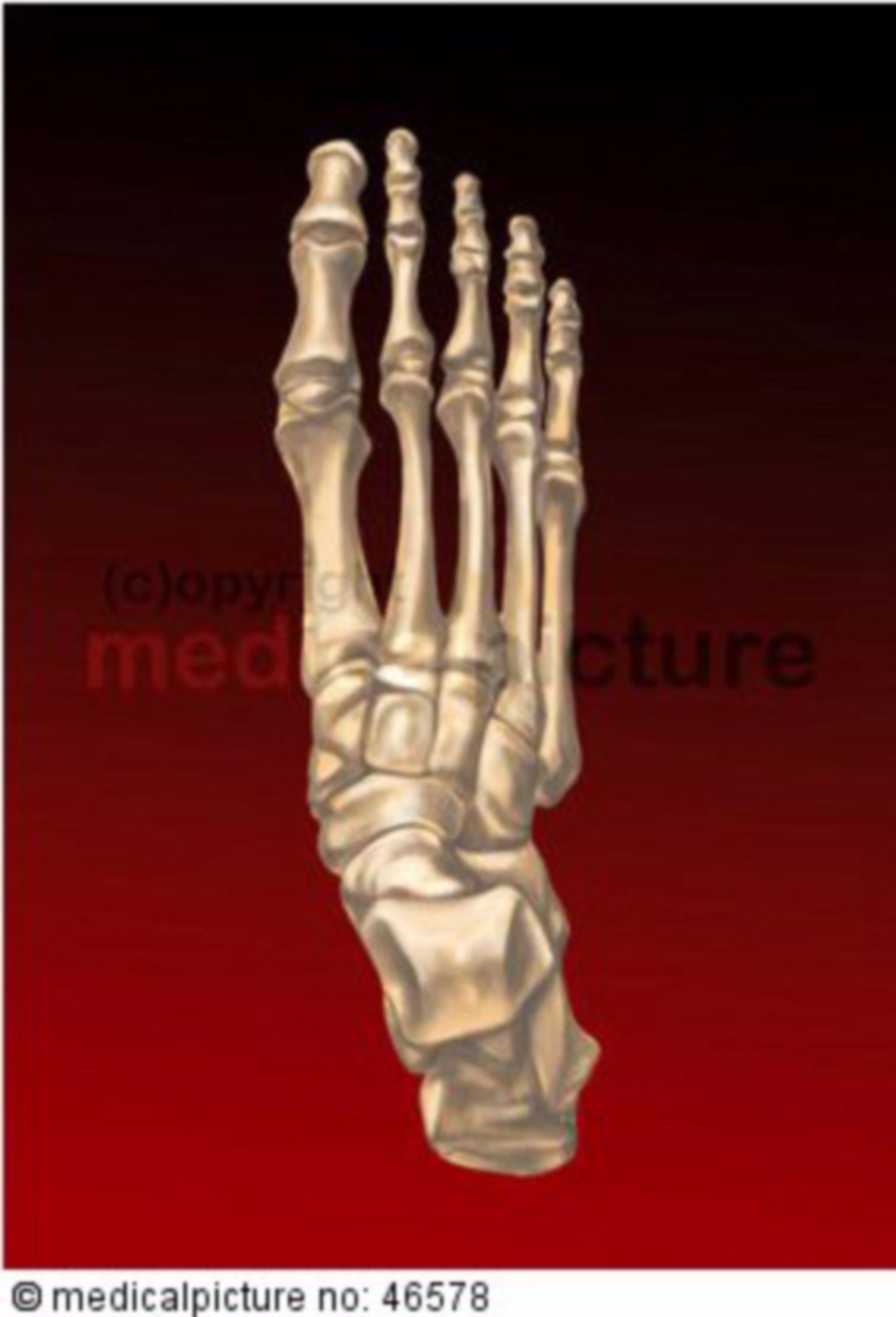 Rechtes menschliches Fußskelett