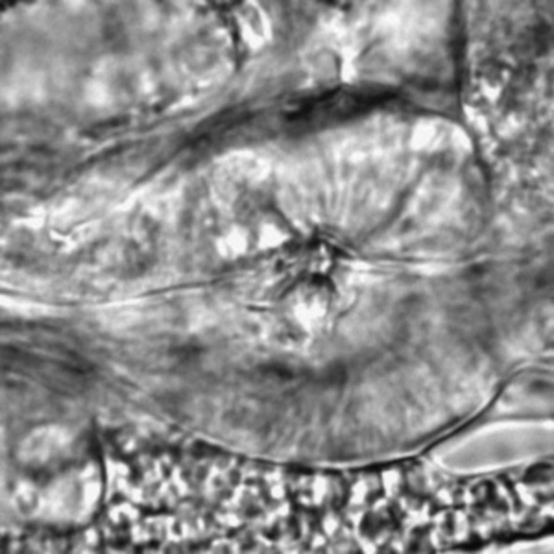 Caenorhabditis elegans - CIL:2192