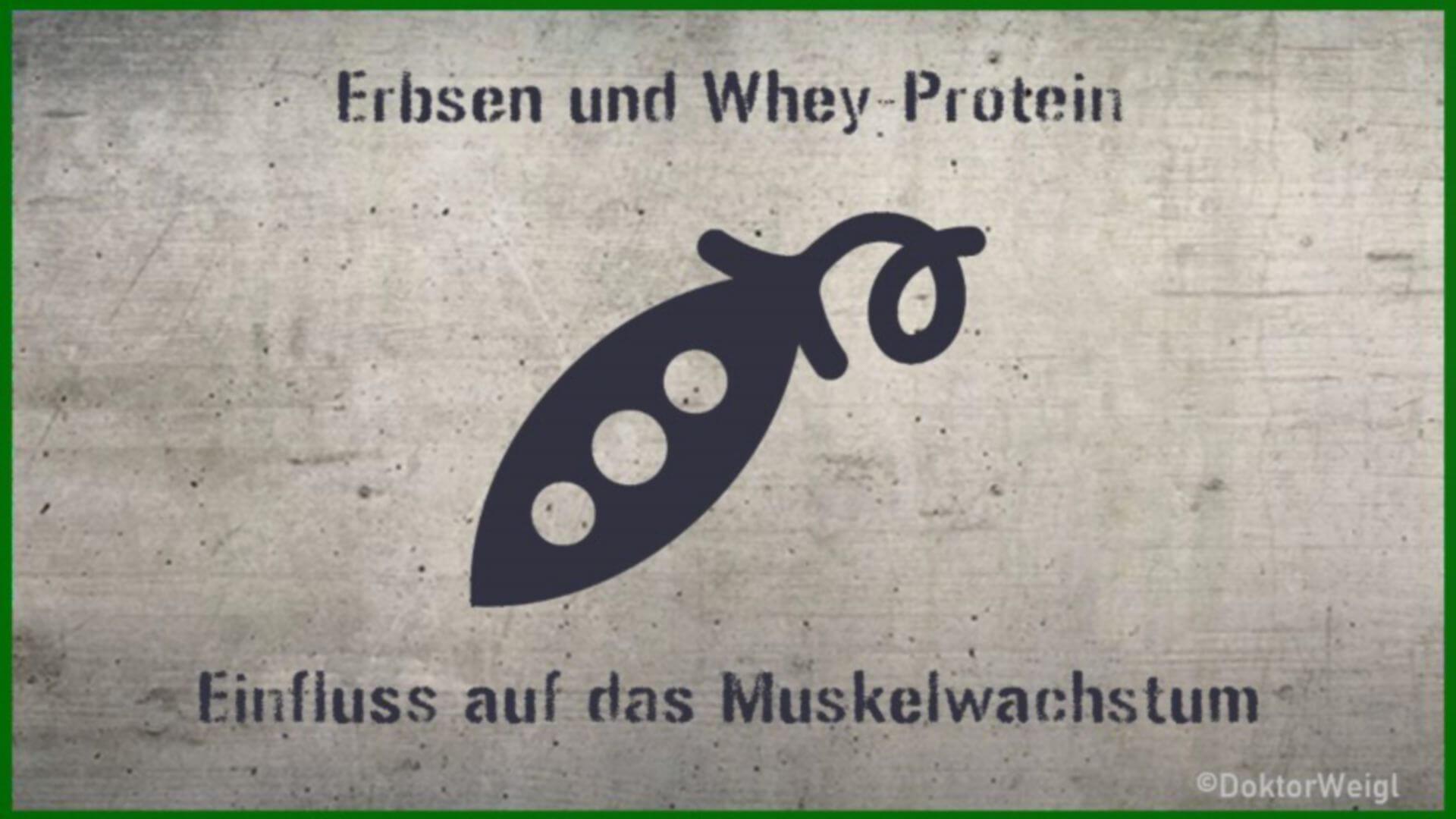 Erbsen- oder Whey-Protein – was lässt die Muskeln besser wachsen?