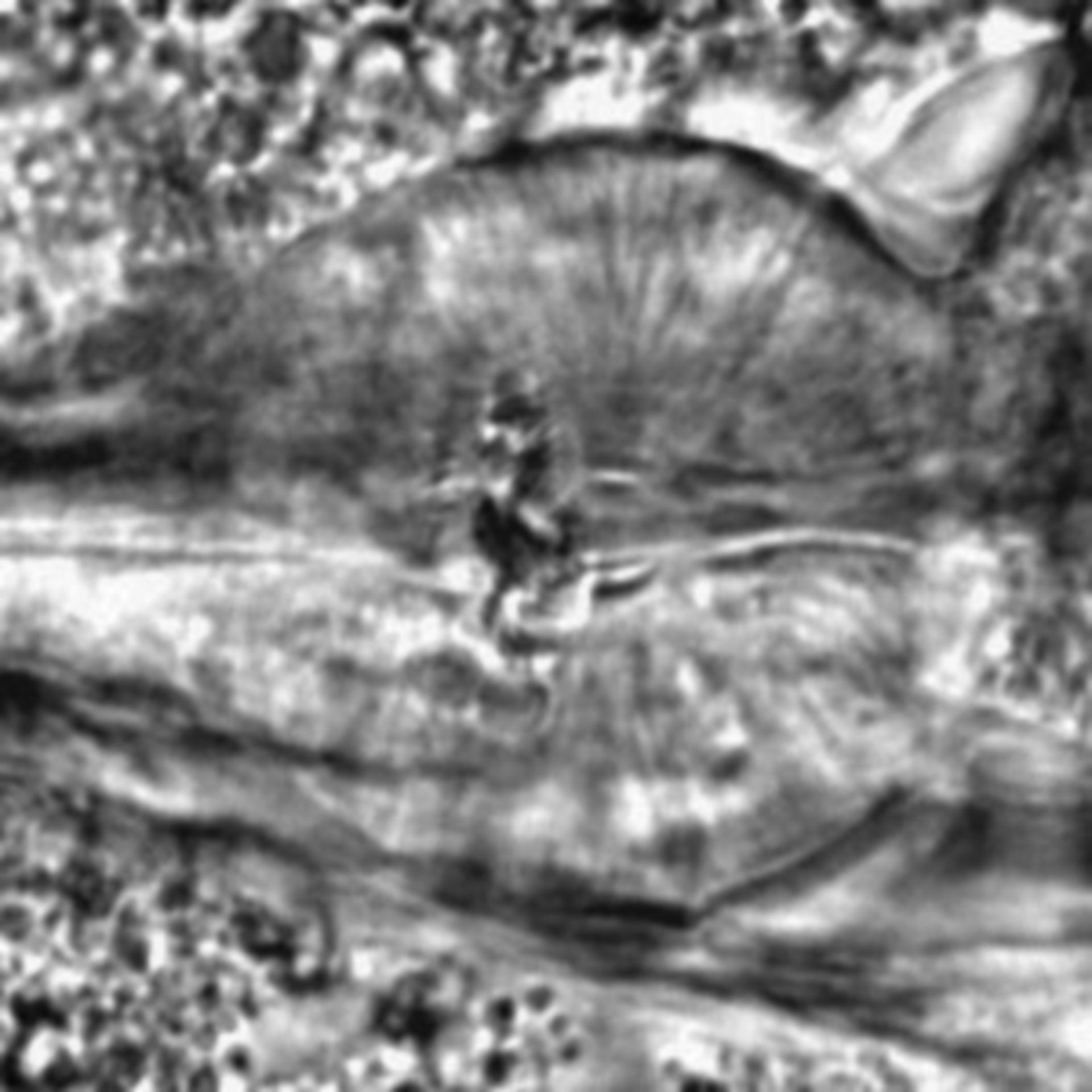 Caenorhabditis elegans - CIL:2189