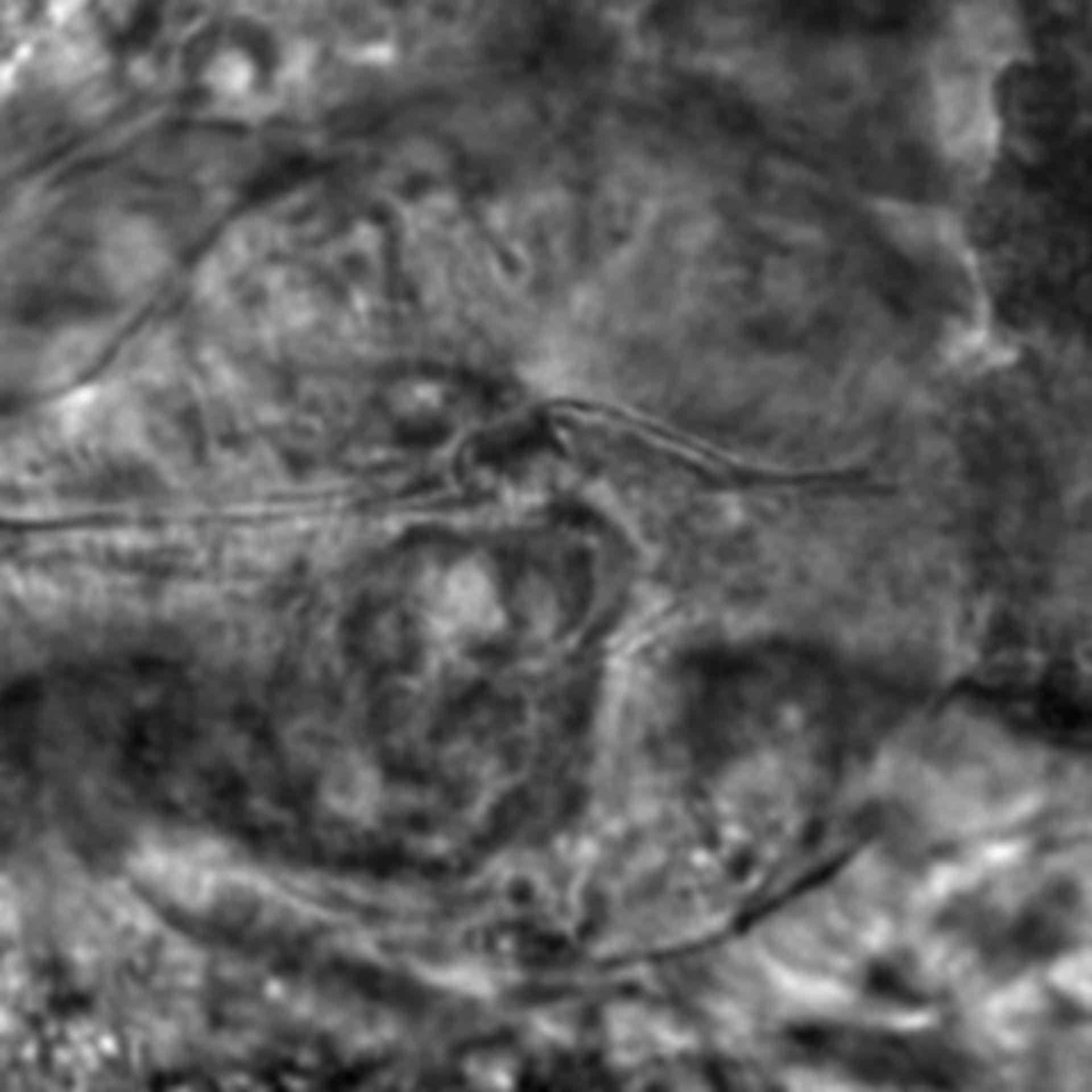 Caenorhabditis elegans - CIL:2650