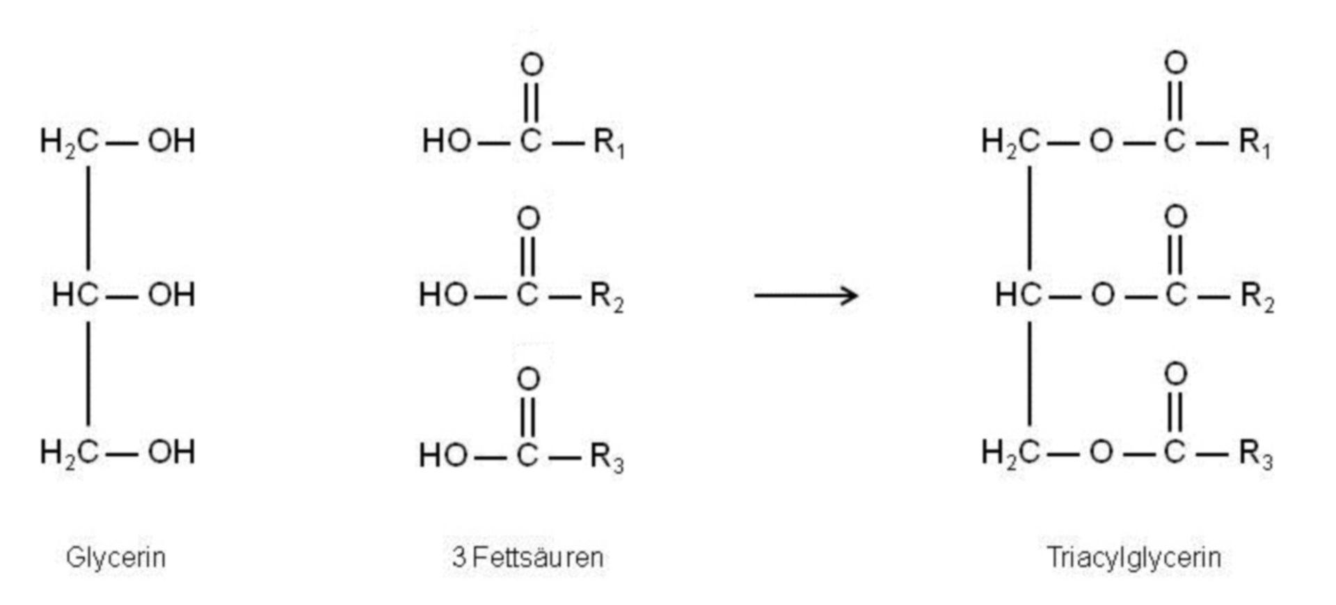 Formación de un triacilglicerol