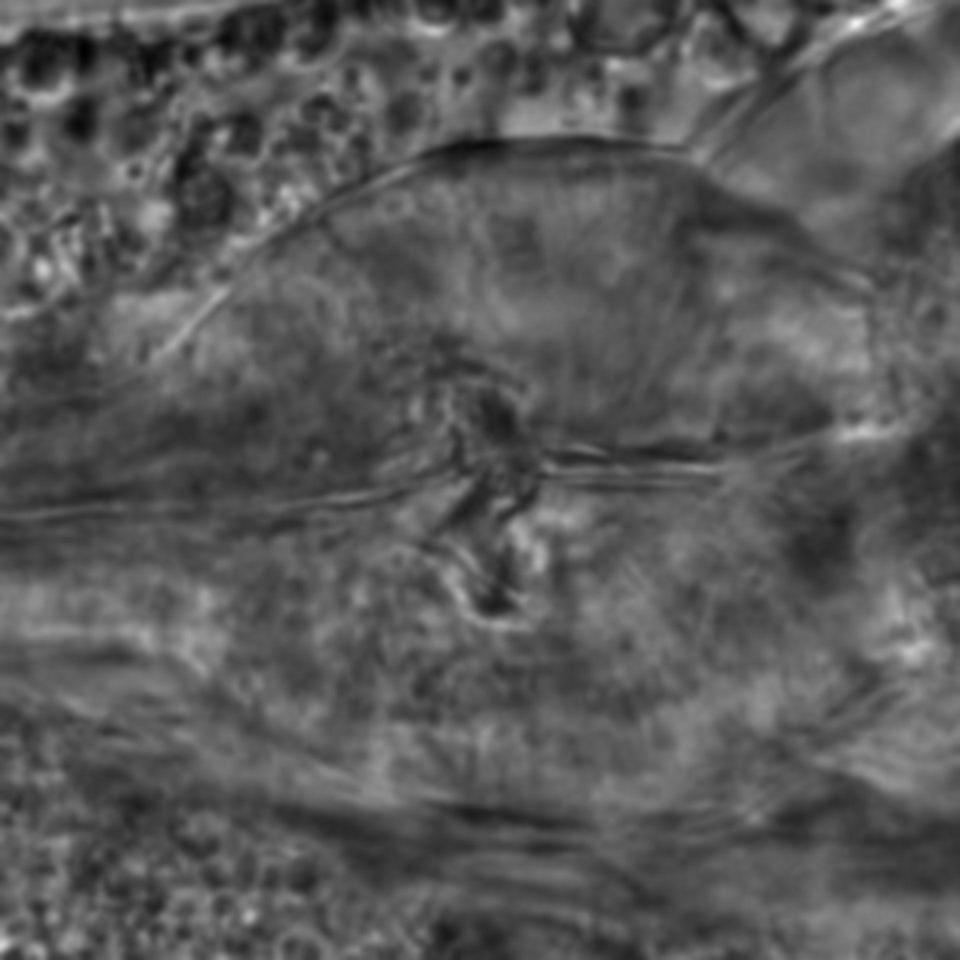Caenorhabditis elegans - CIL:2022