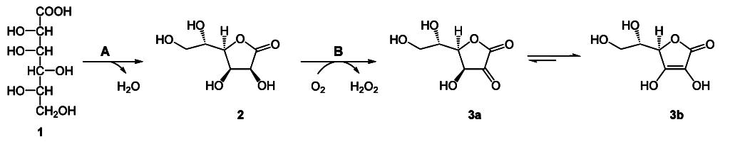 Biosynthese Ascorbinsaure