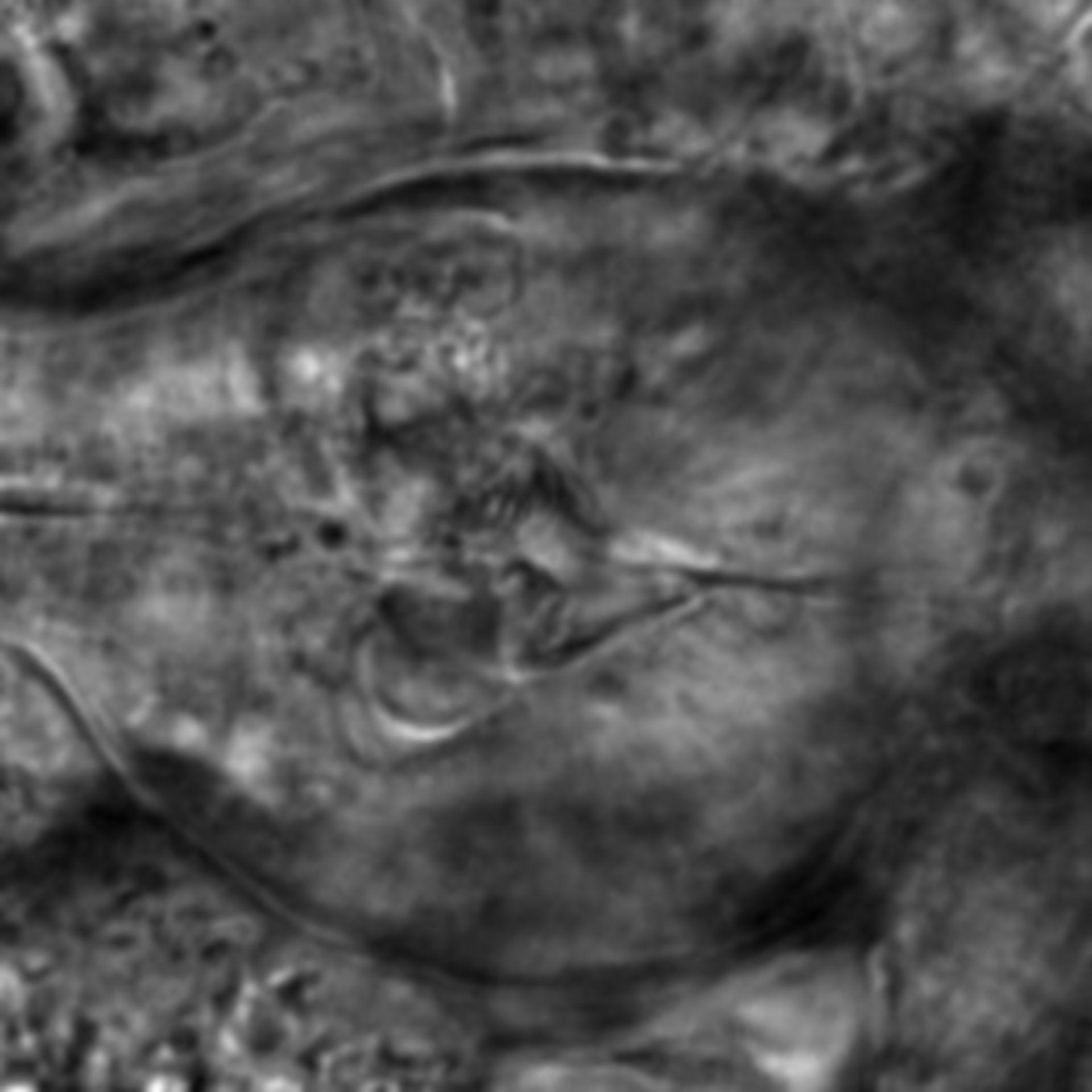 Caenorhabditis elegans - CIL:2802