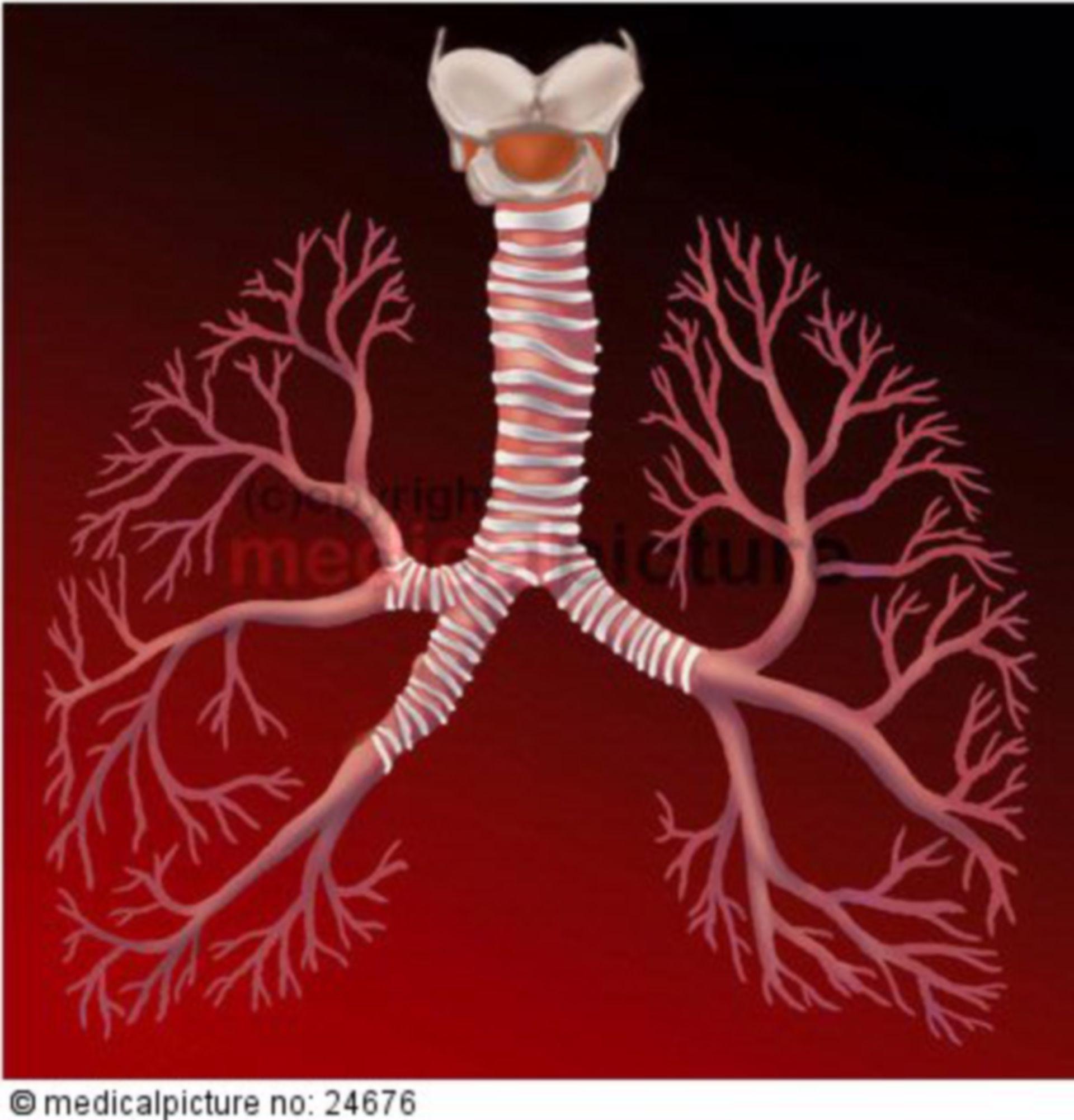 Menschlicher Atemapparat