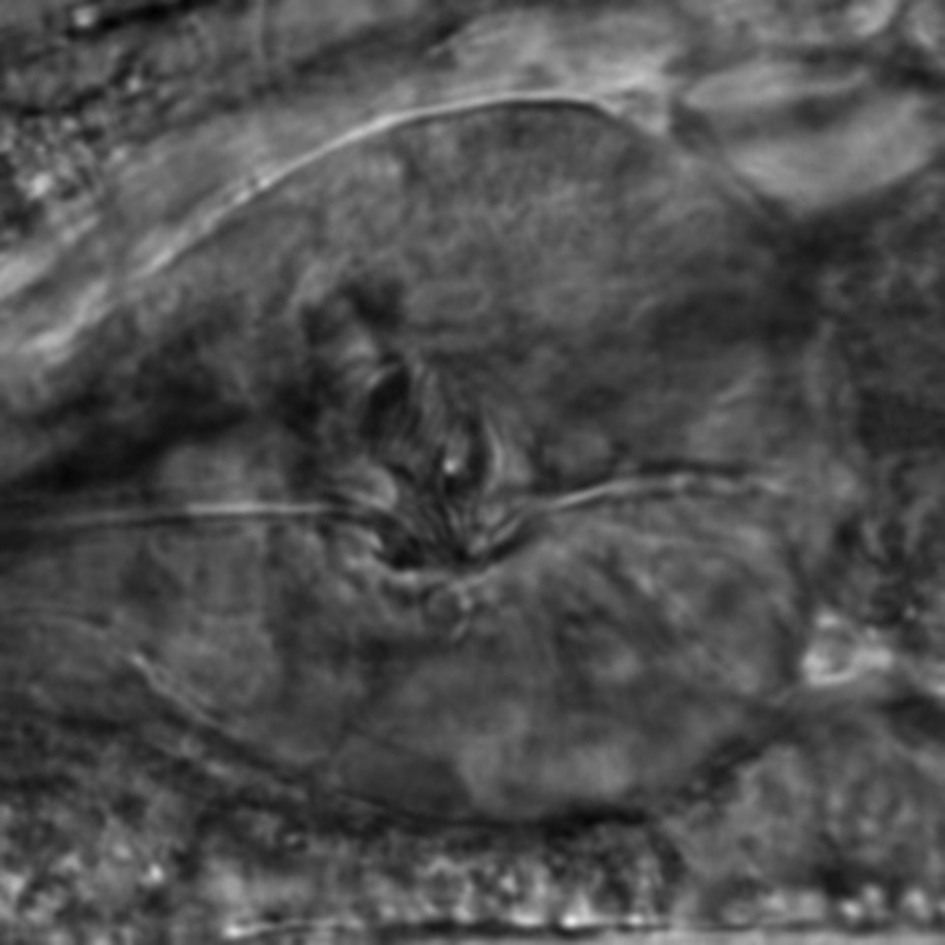 Caenorhabditis elegans - CIL:2809