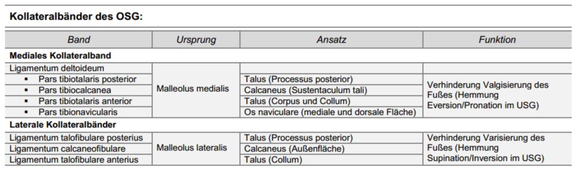 Collateral ligaments of the talocrural joint