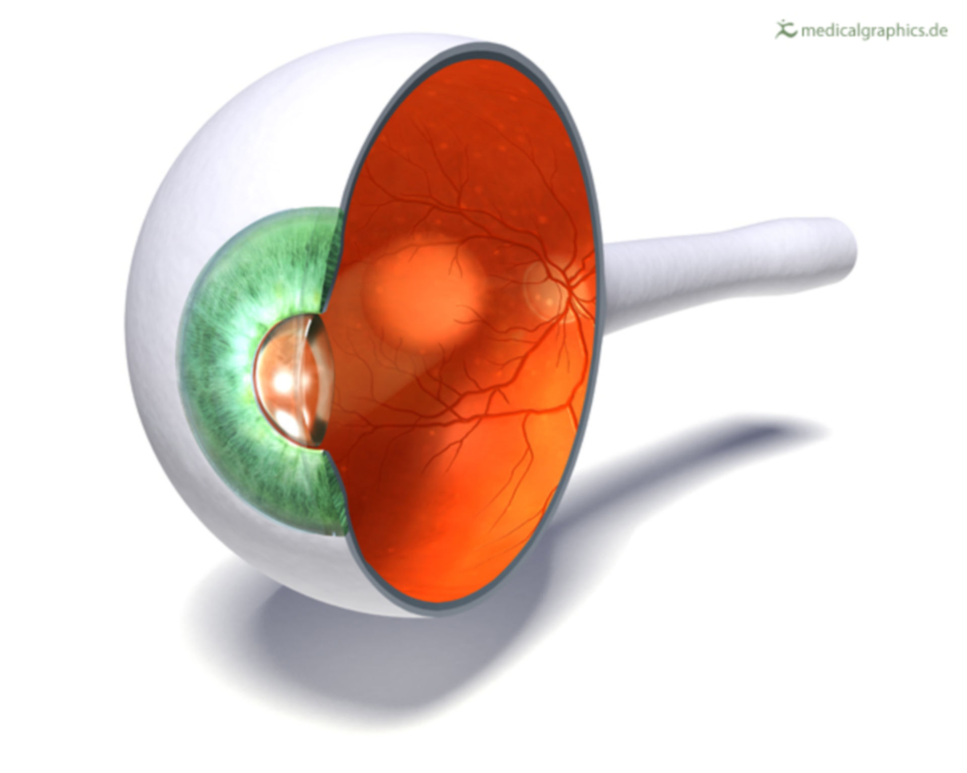 Struttura dell'occhio umano