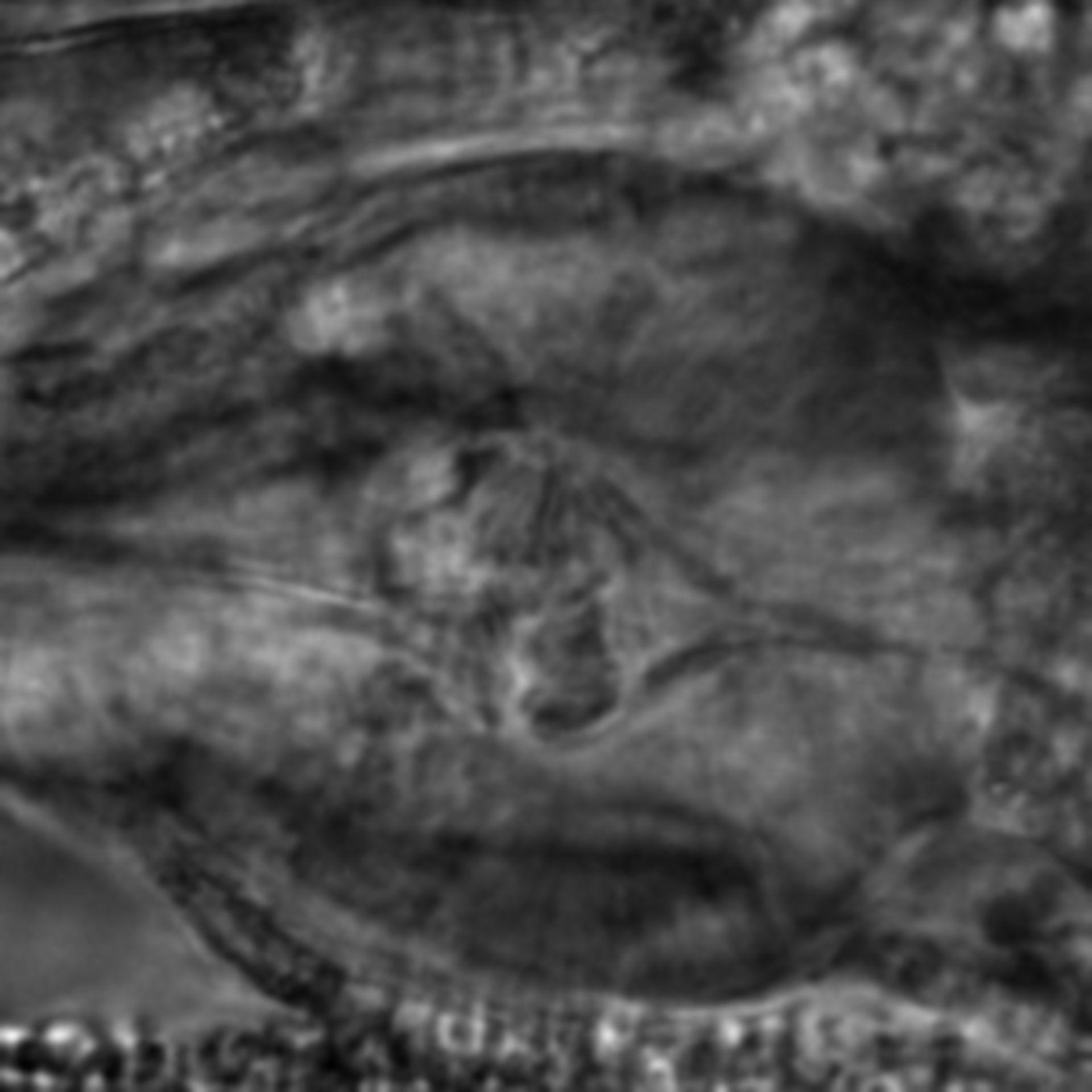 Caenorhabditis elegans - CIL:2786