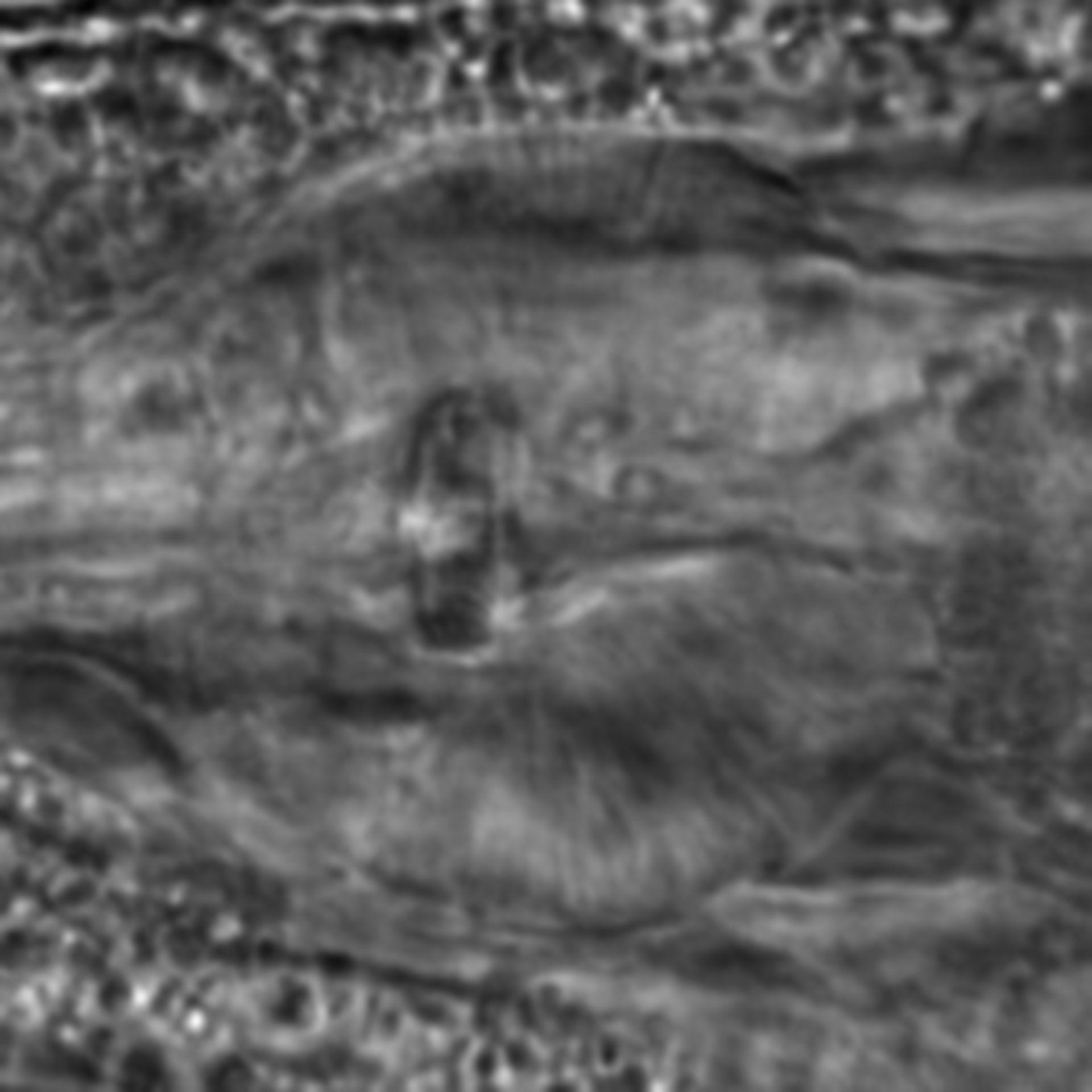Caenorhabditis elegans - CIL:1921