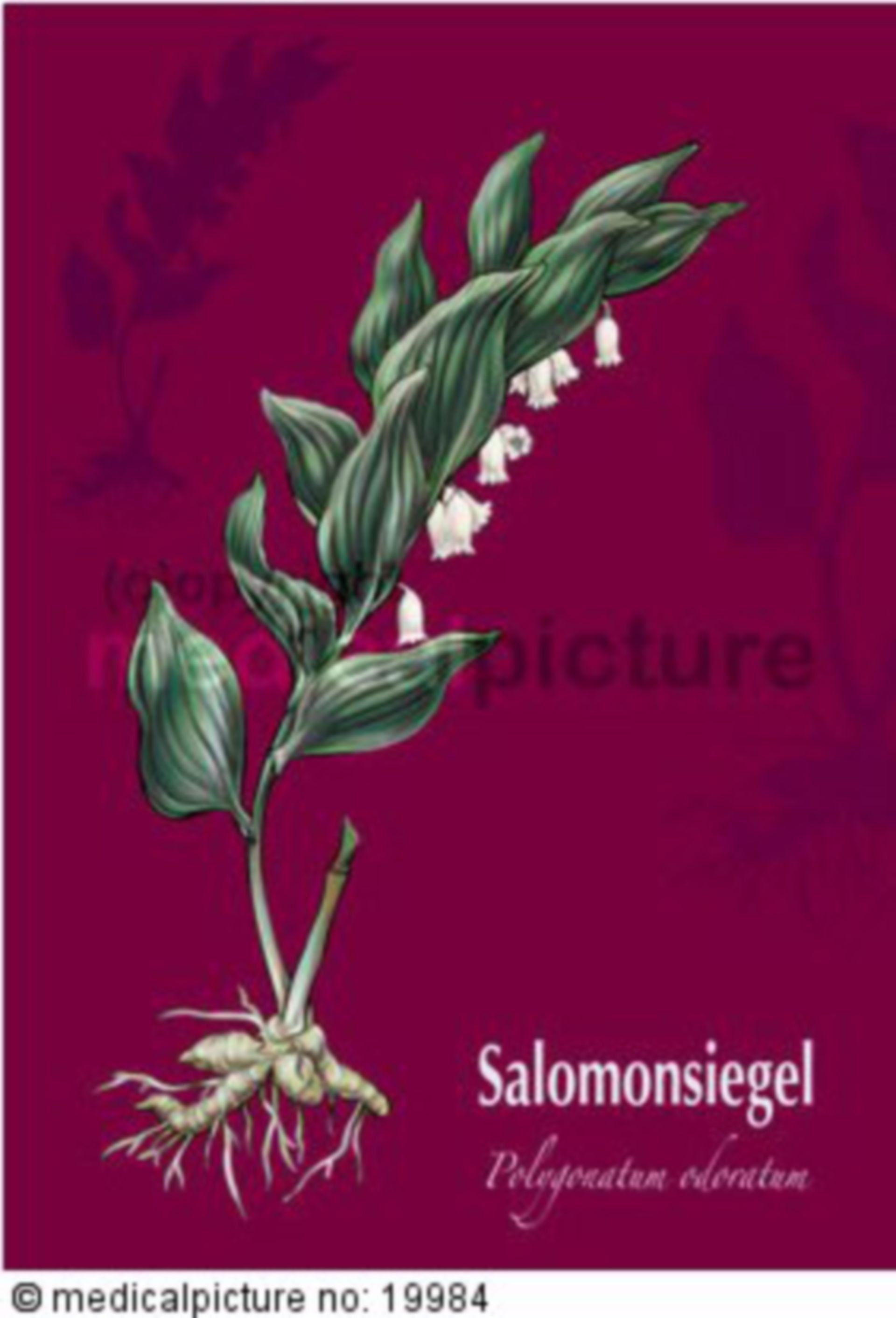 Salomonsiegel, Polygonatum odoratum