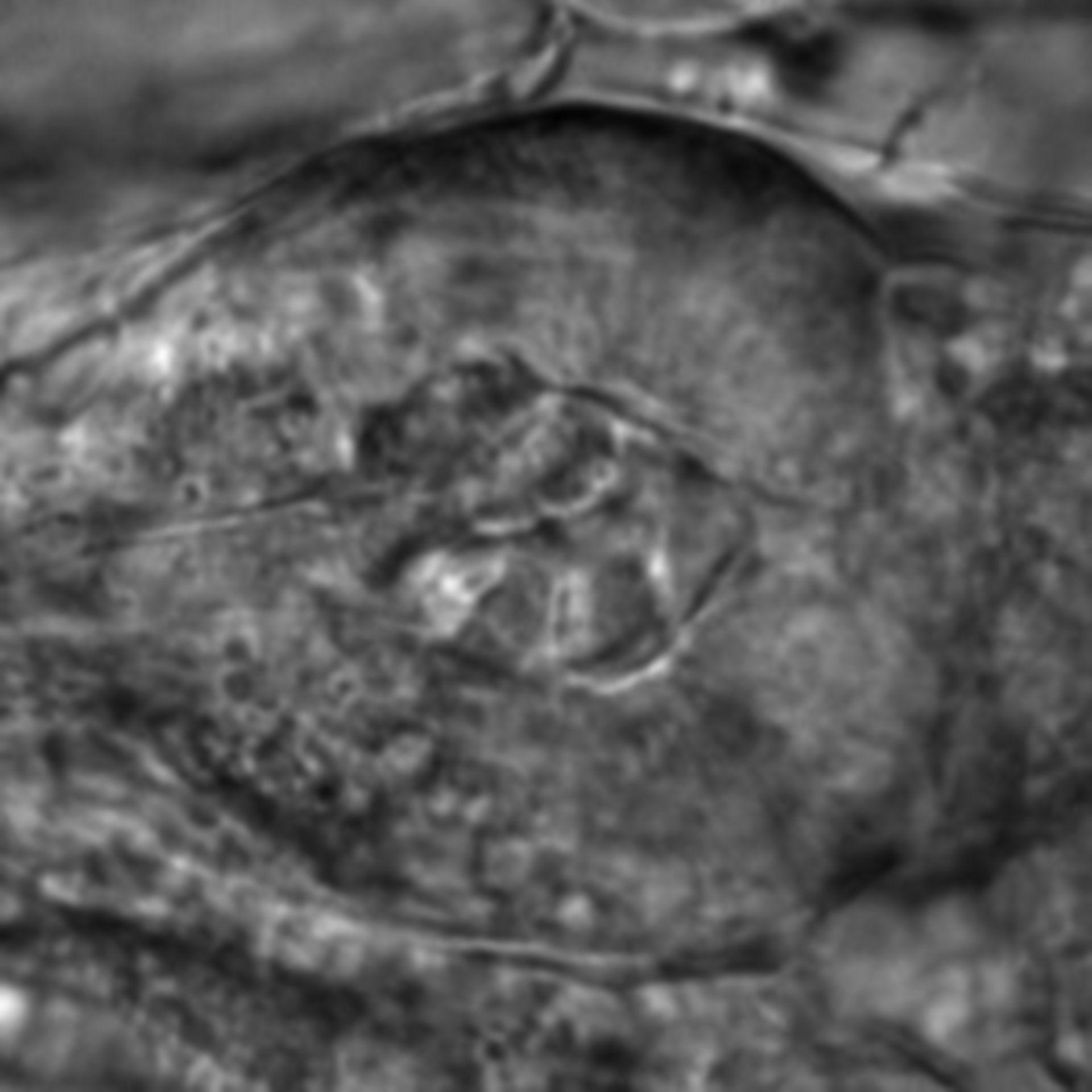 Caenorhabditis elegans - CIL:2729