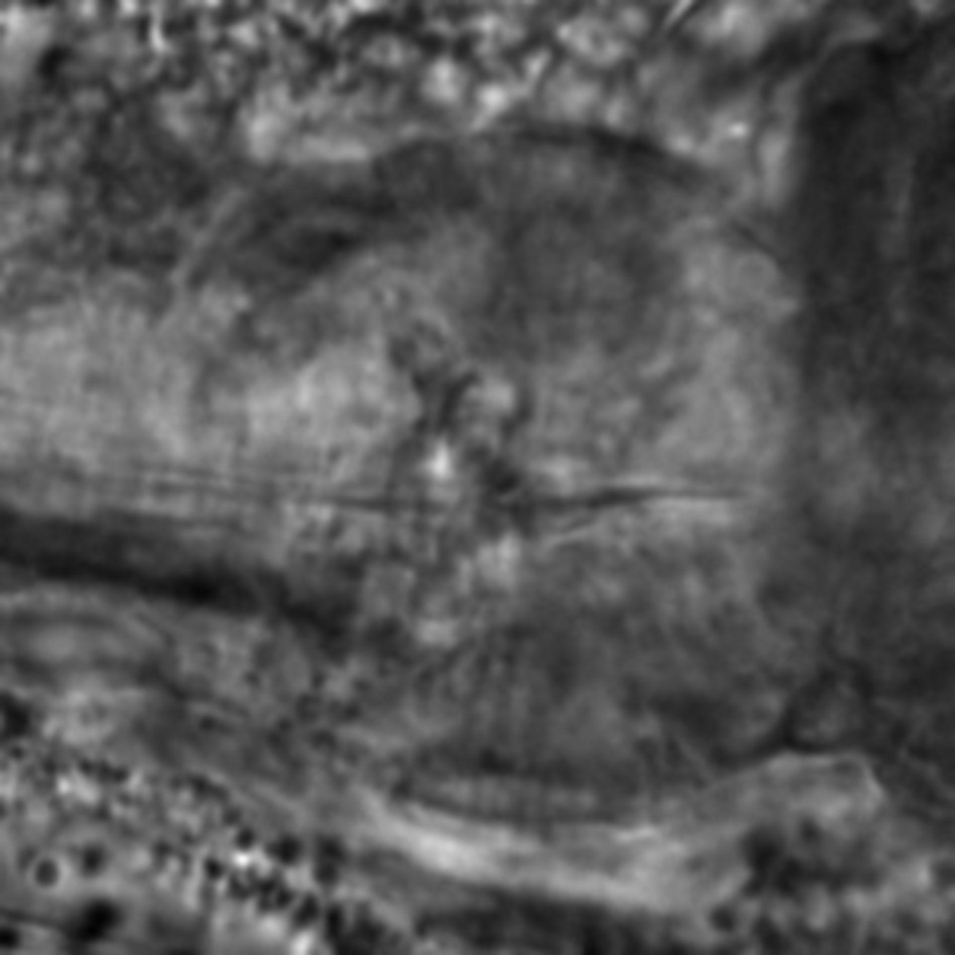 Caenorhabditis elegans - CIL:1917