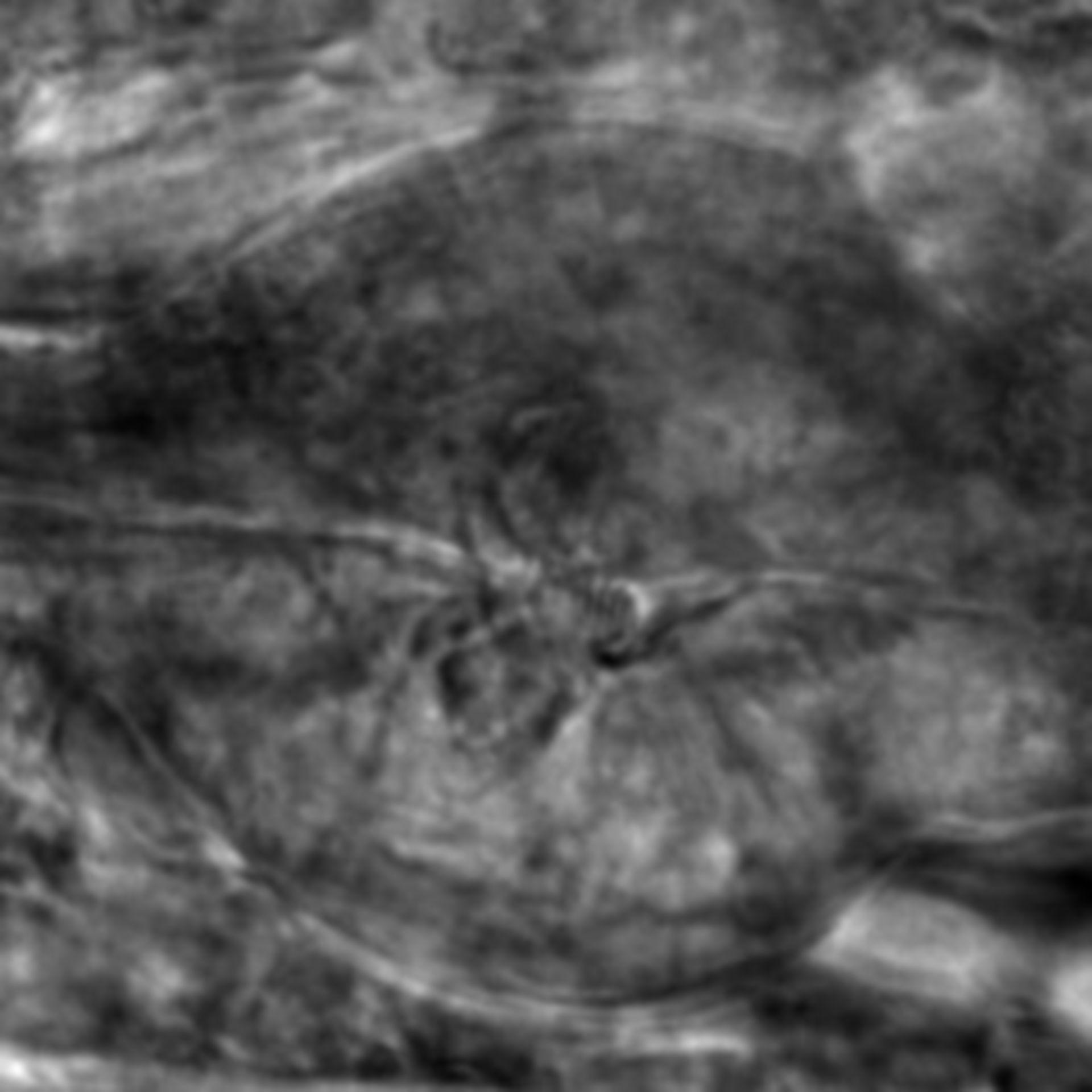 Caenorhabditis elegans - CIL:2838