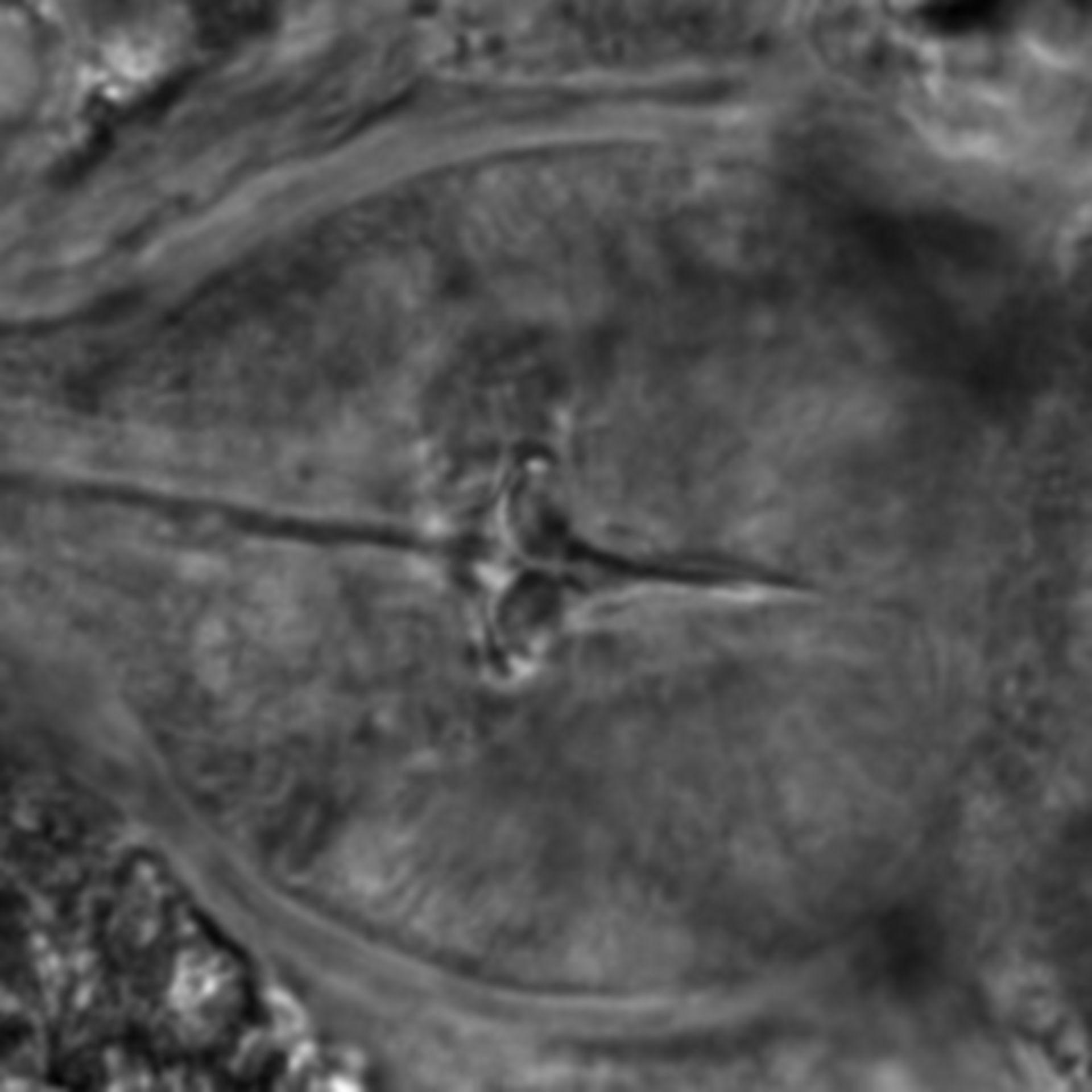 Caenorhabditis elegans - CIL:2154