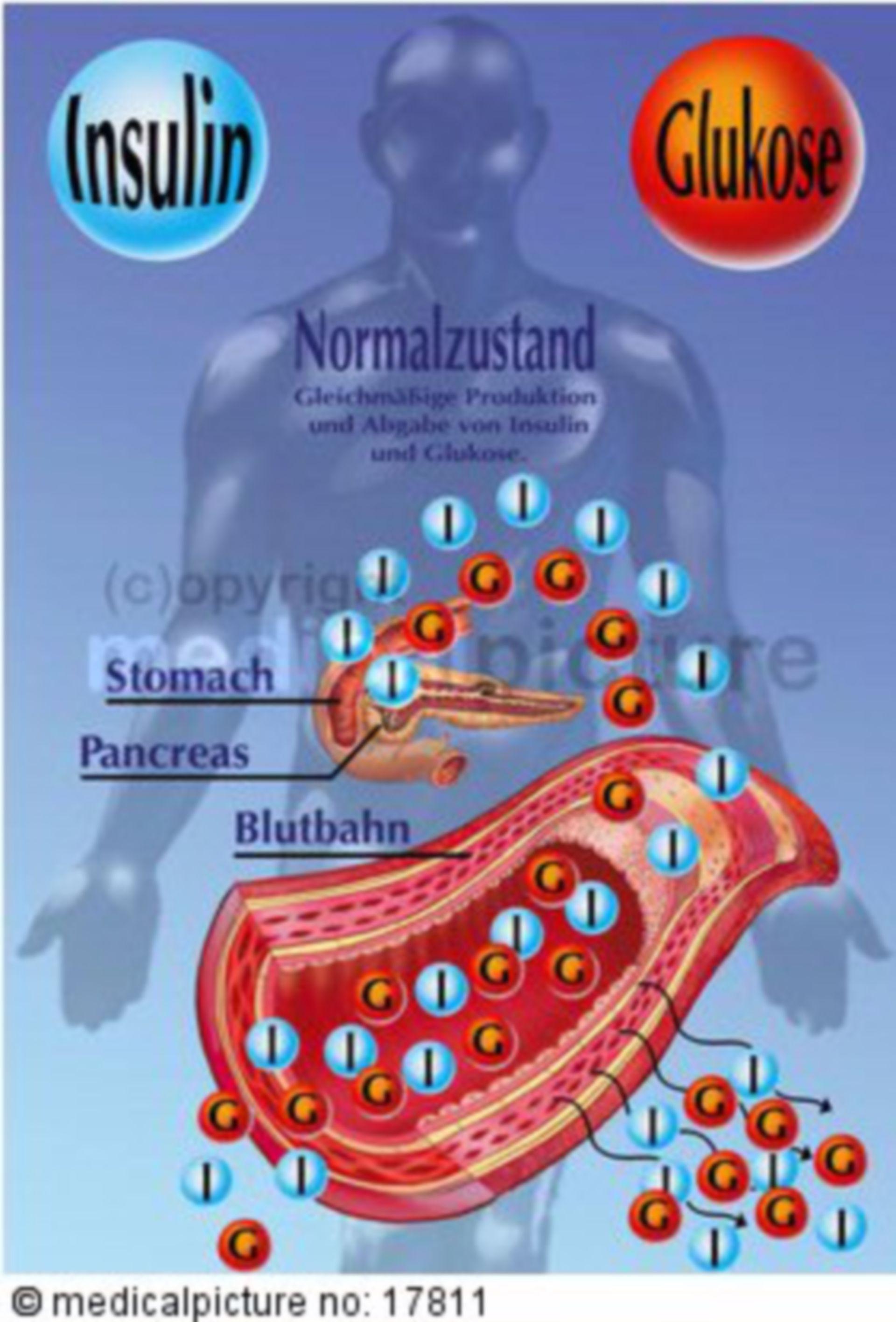Insulin secretion