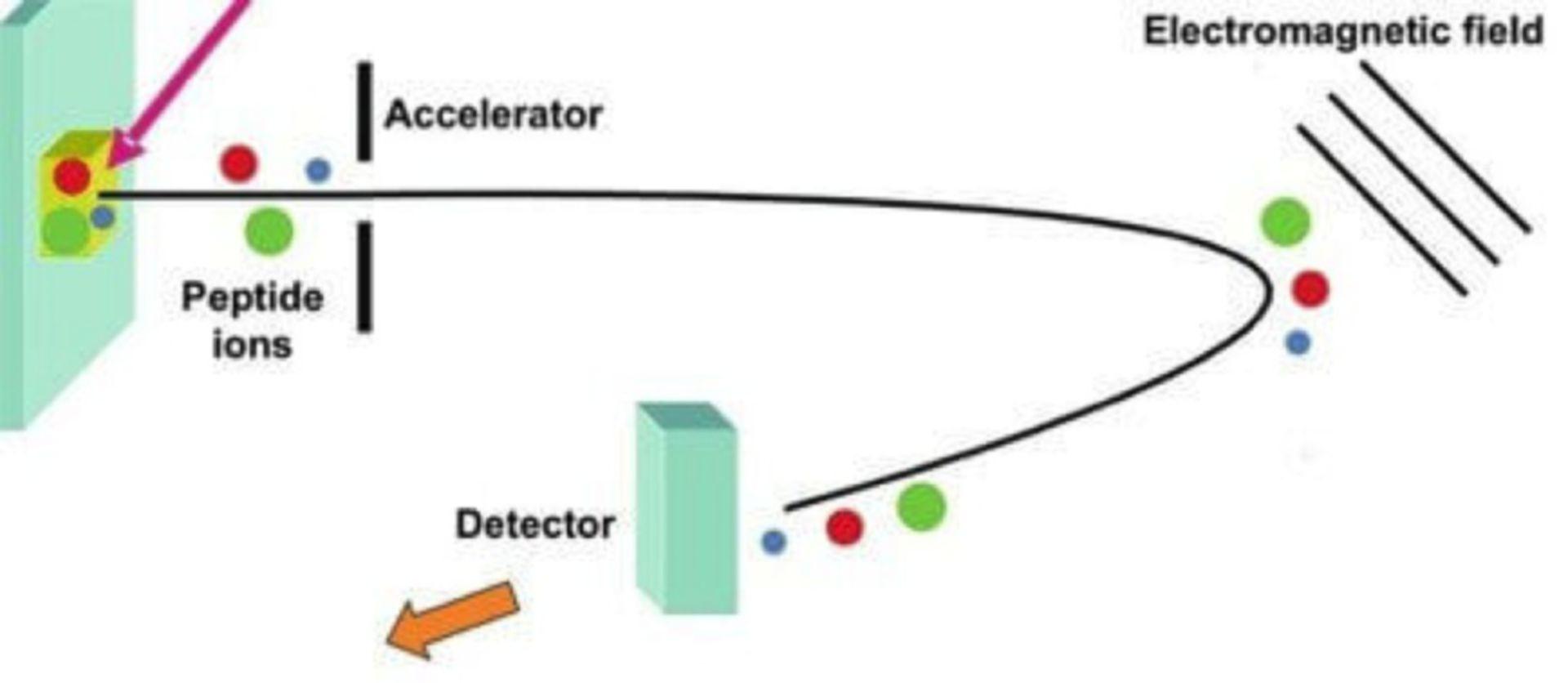 molecular weight analysis workflow