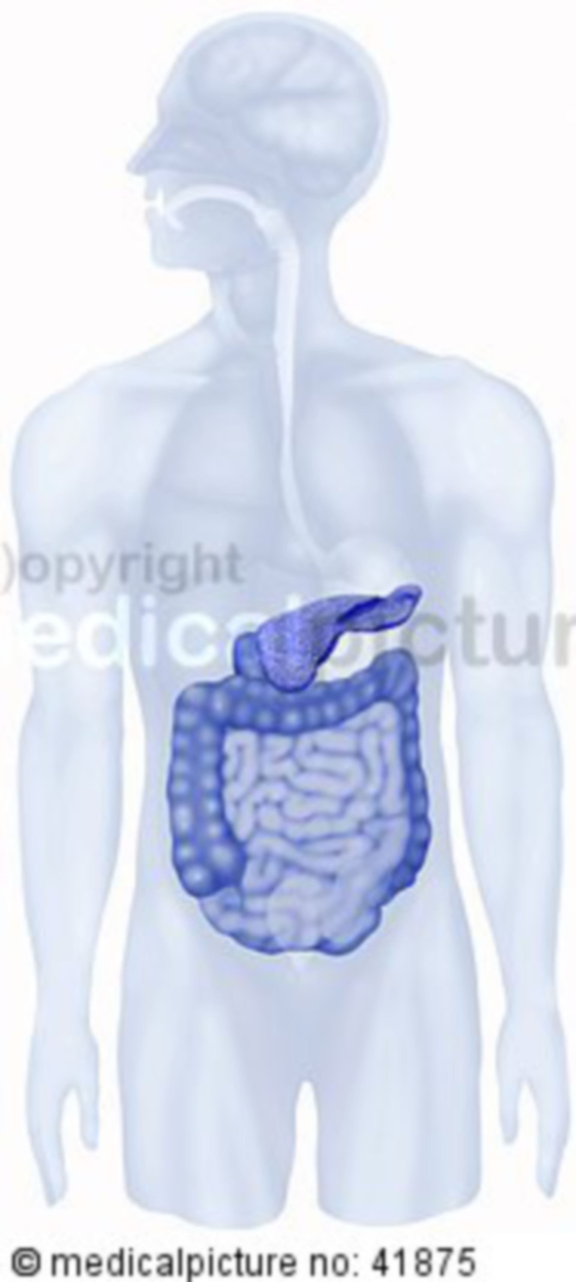 Pancreas and intestine