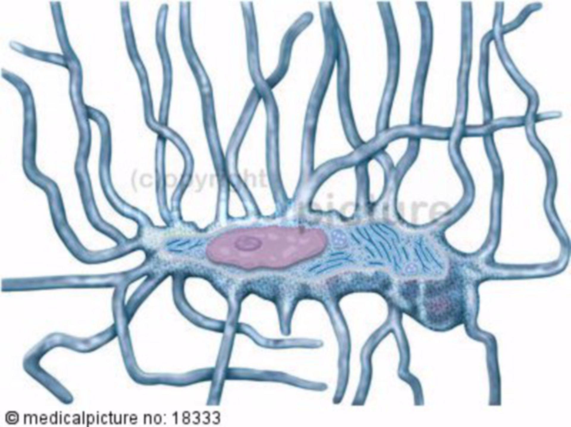 Knochenzelle, Osteozyt