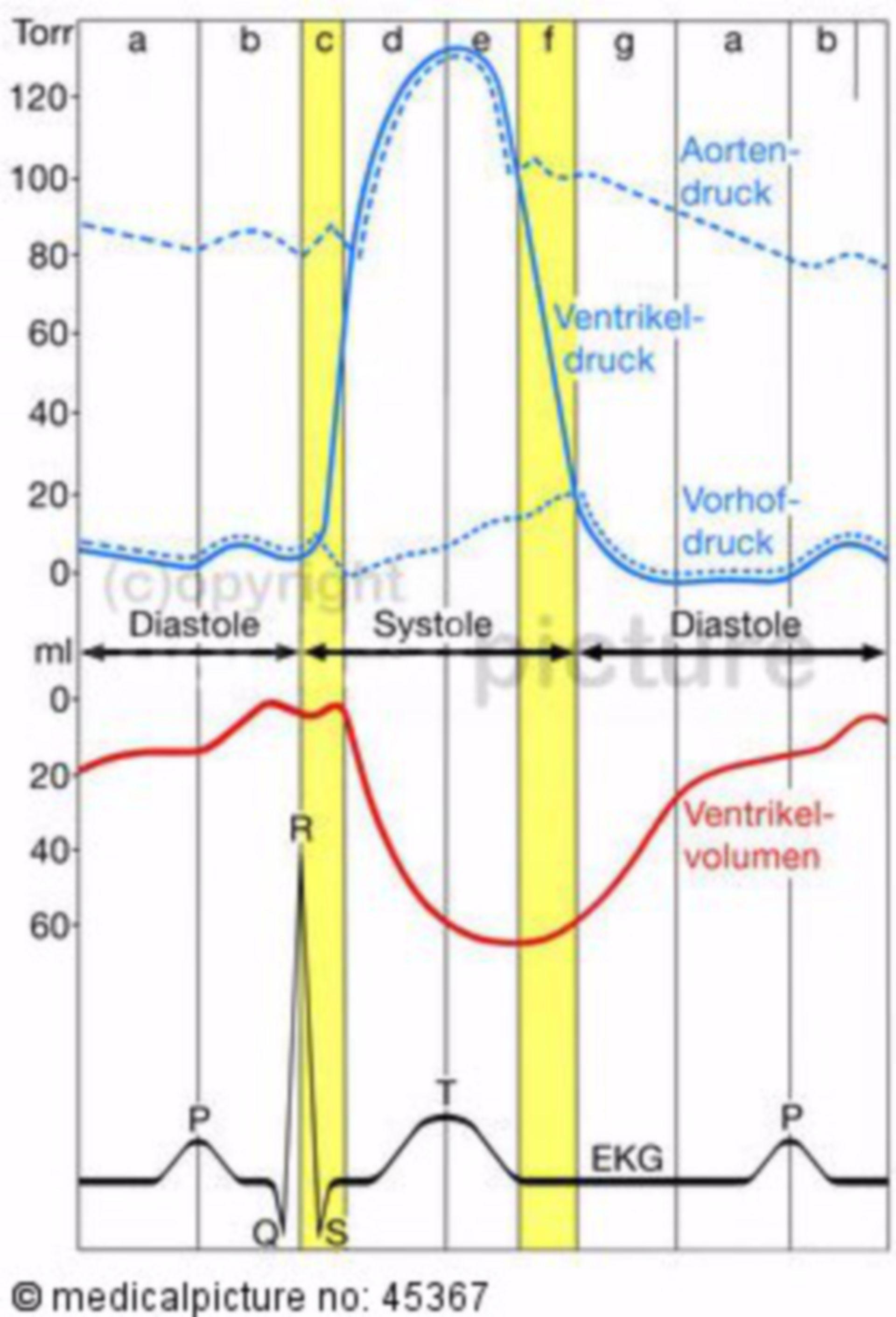 Elettrofisiologia delle azioni del cuore