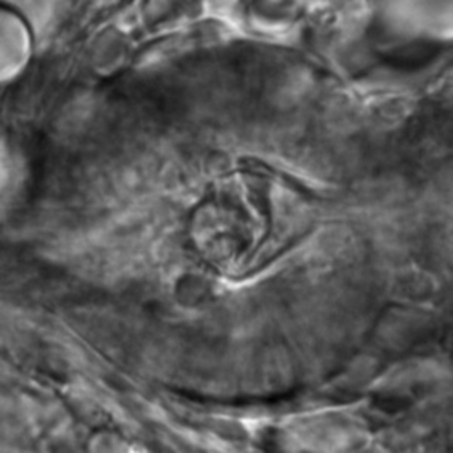 Caenorhabditis elegans - CIL:2667
