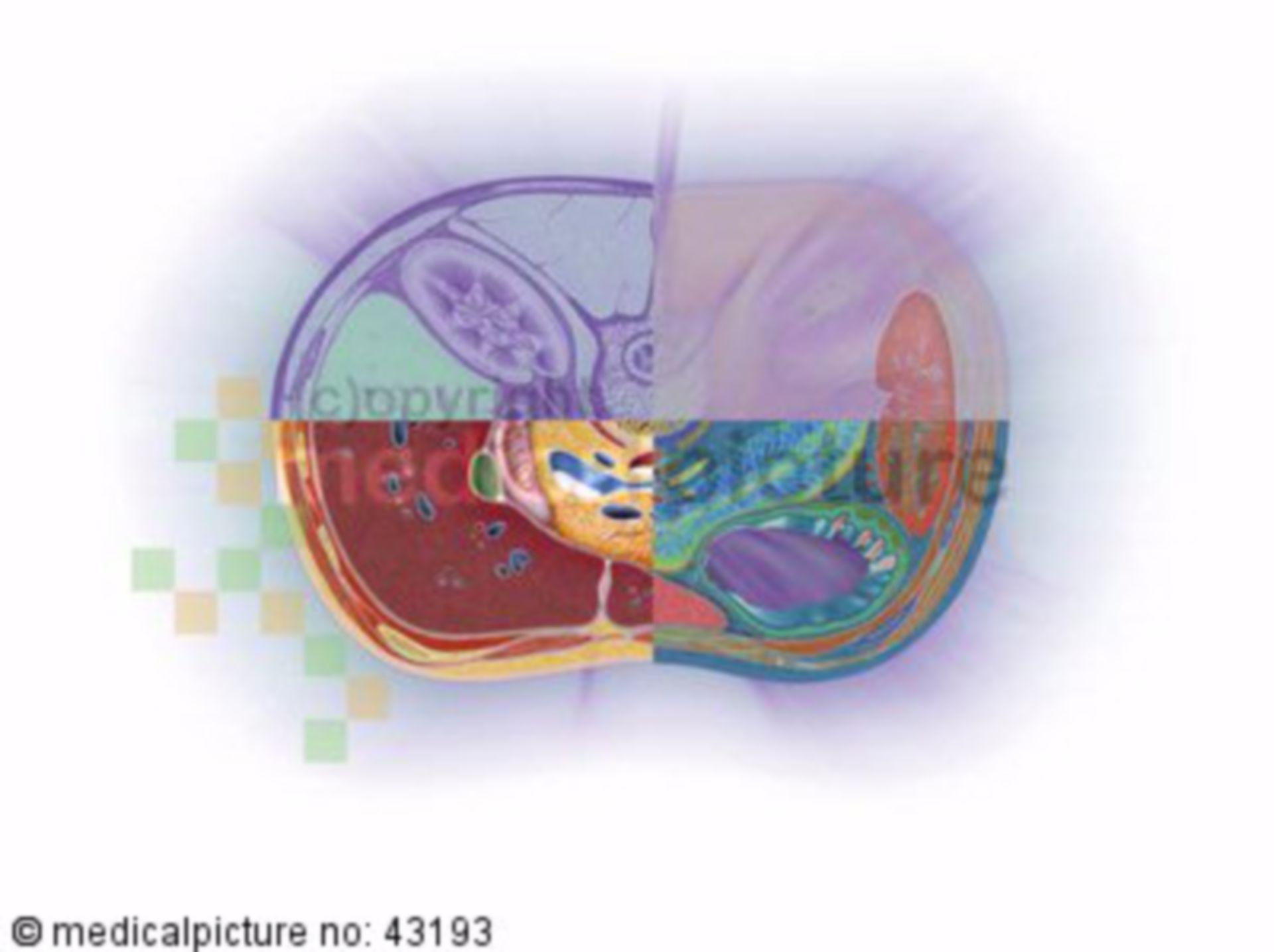 Bauchraum