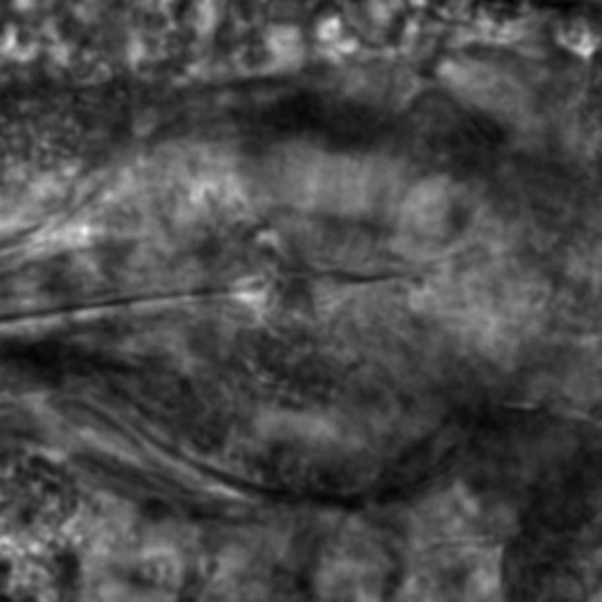 Caenorhabditis elegans - CIL:2191