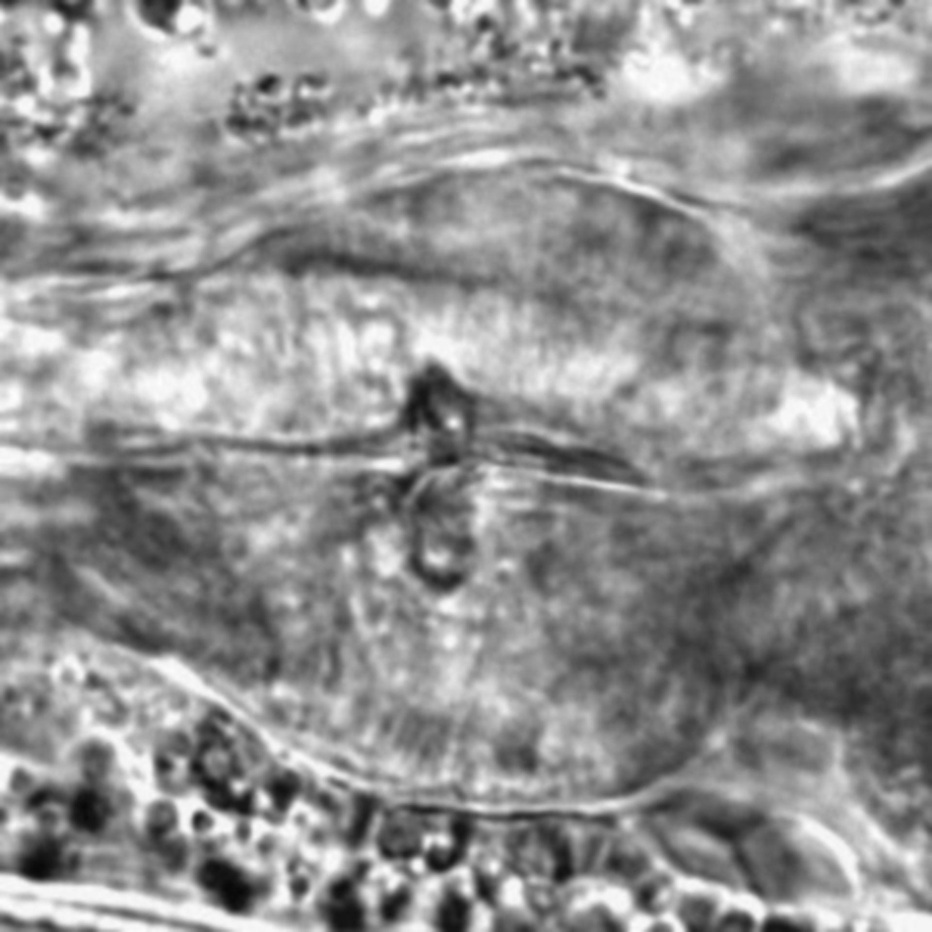 Caenorhabditis elegans - CIL:1719