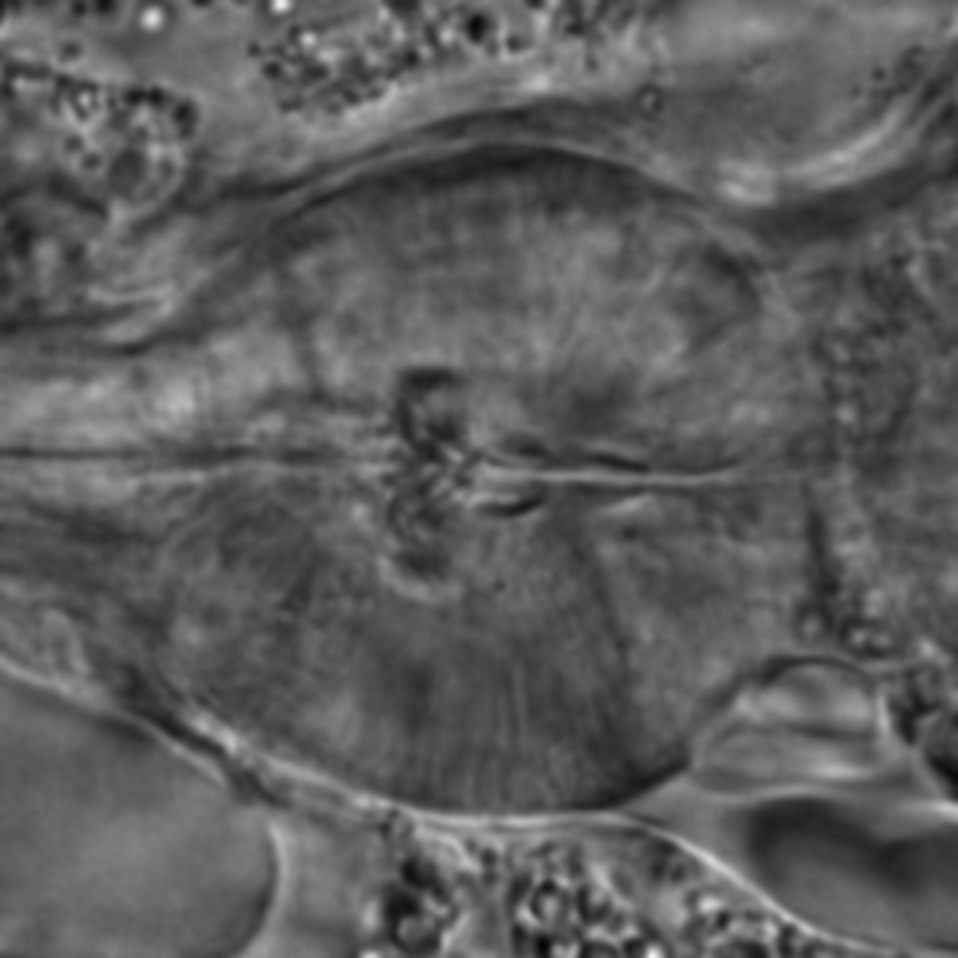 Caenorhabditis elegans - CIL:1694