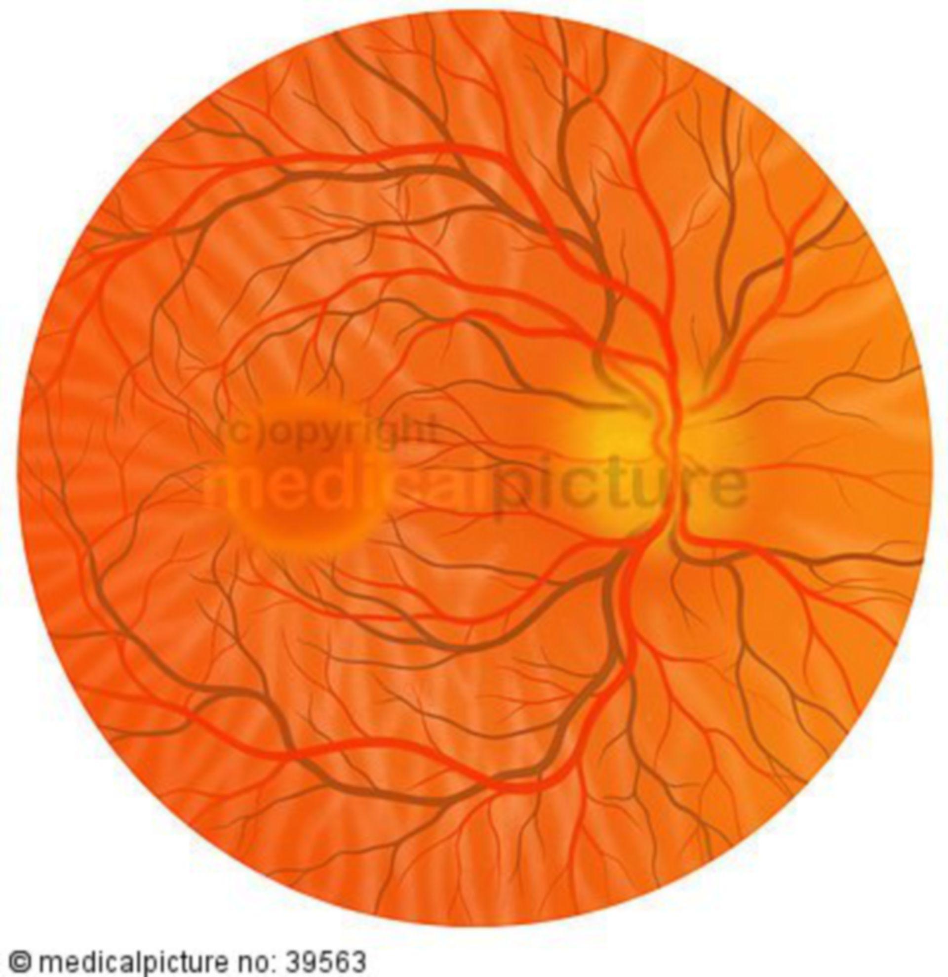 Healthy Ocular Fundus