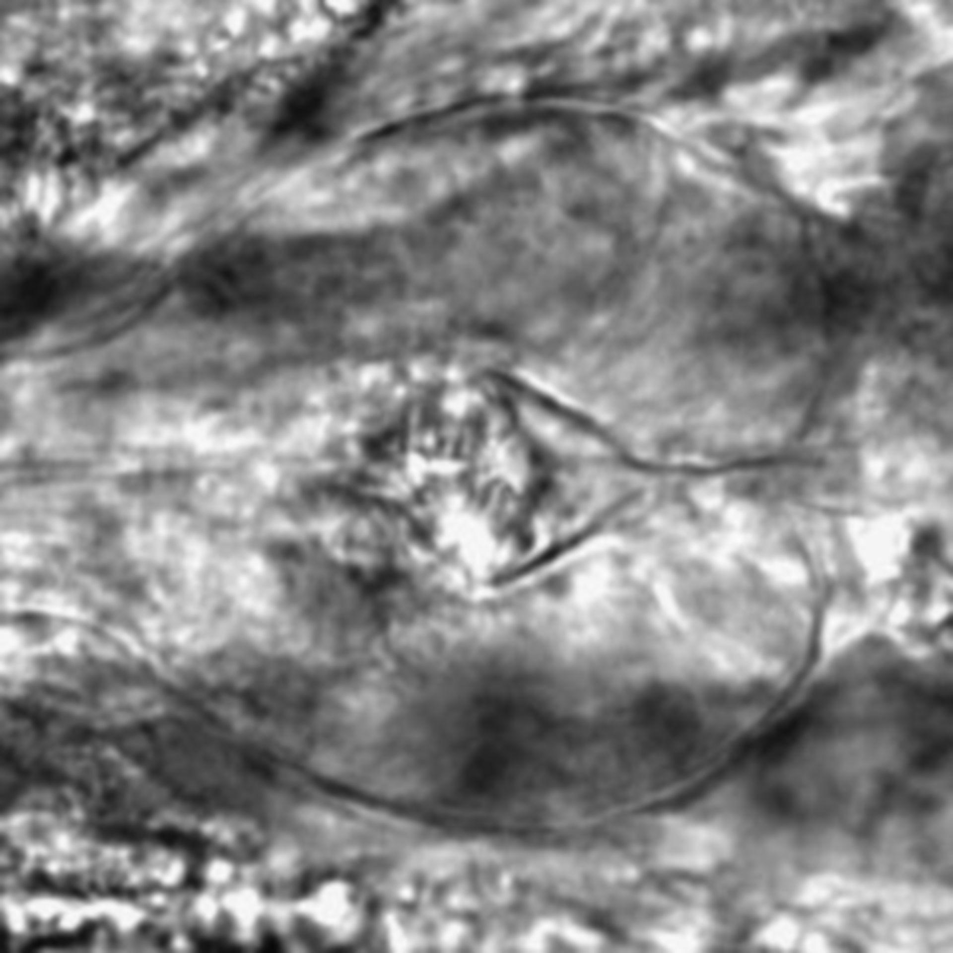 Caenorhabditis elegans - CIL:2719