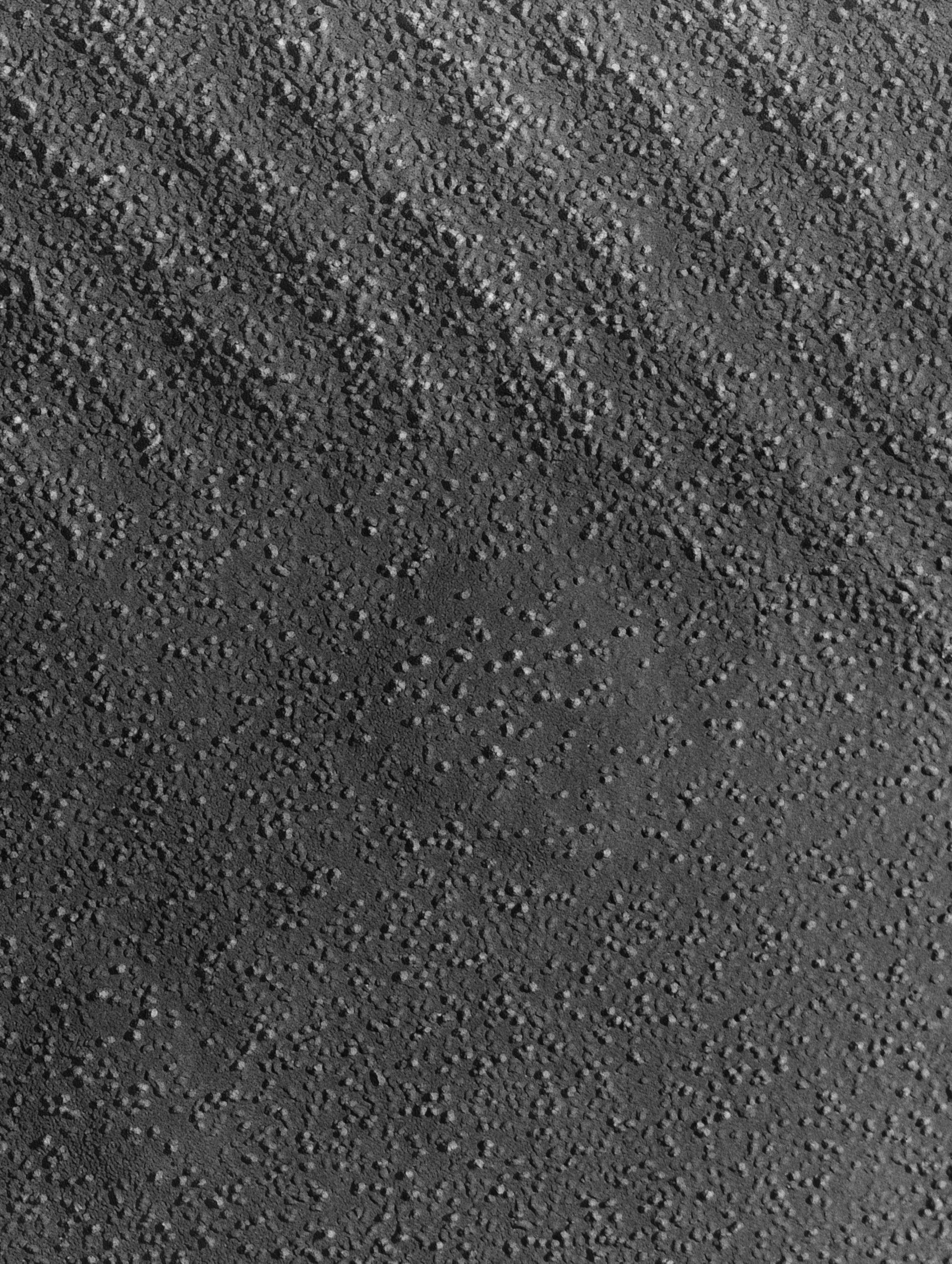 Damselfly (Sarcoplasmic reticulum) - CIL:18447