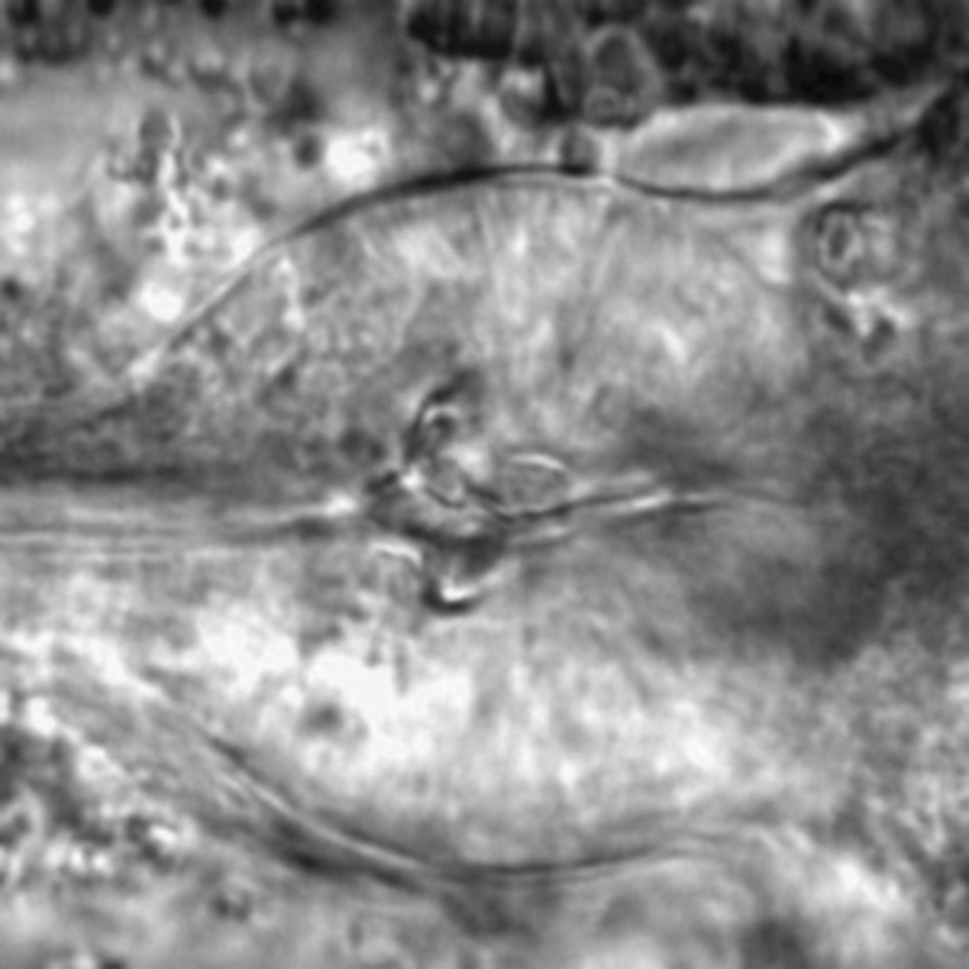 Caenorhabditis elegans - CIL:1767