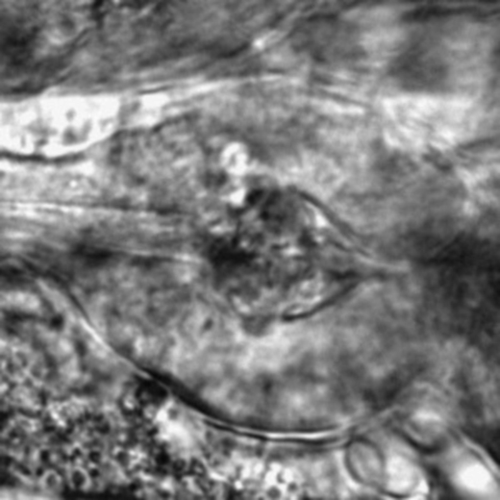 Caenorhabditis elegans - CIL:2783