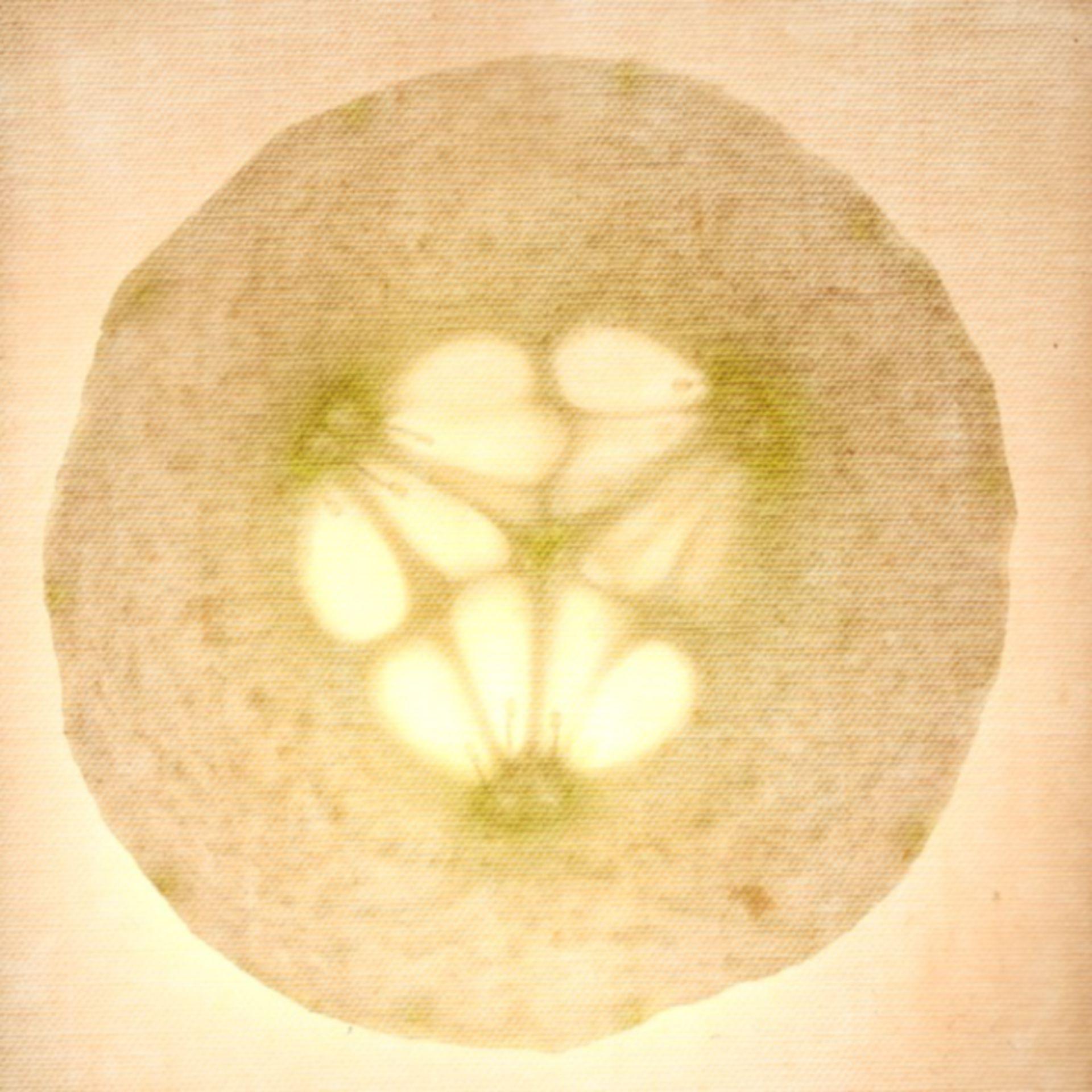 Gurkenscheibe 2