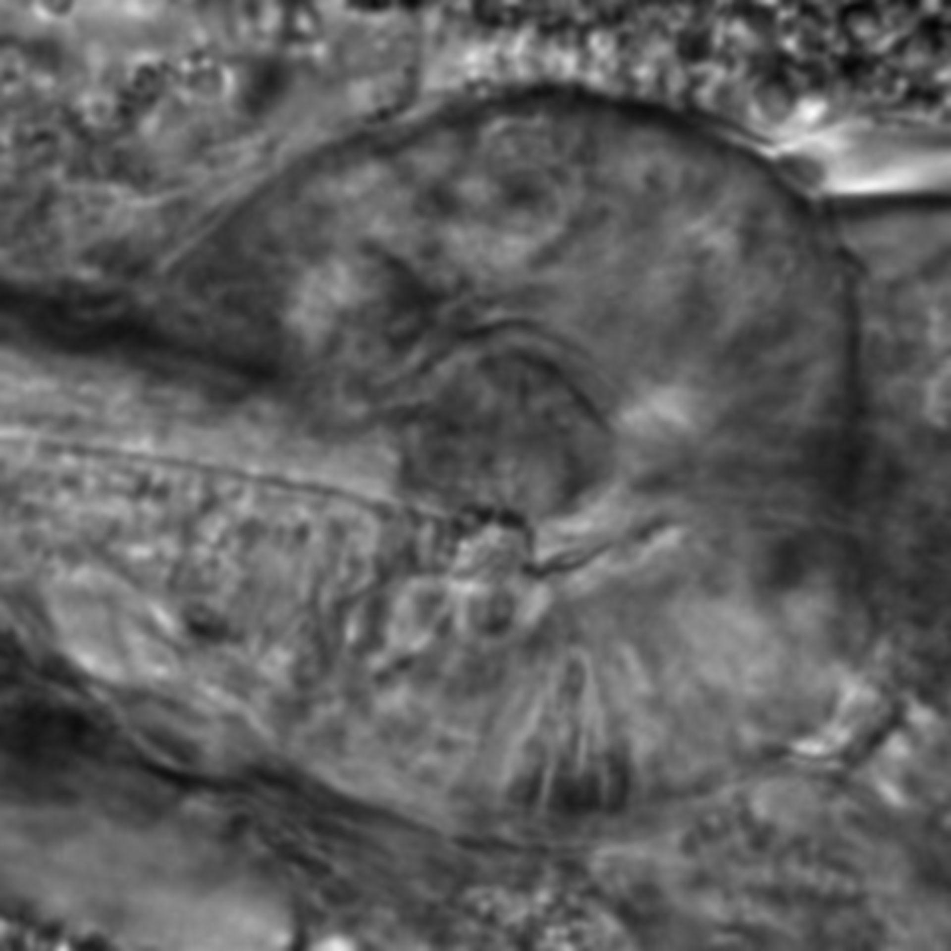Caenorhabditis elegans - CIL:2800
