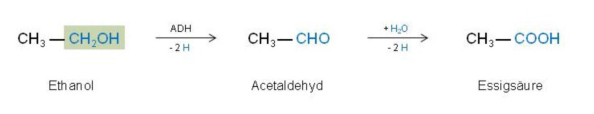 The degradation of ethanol