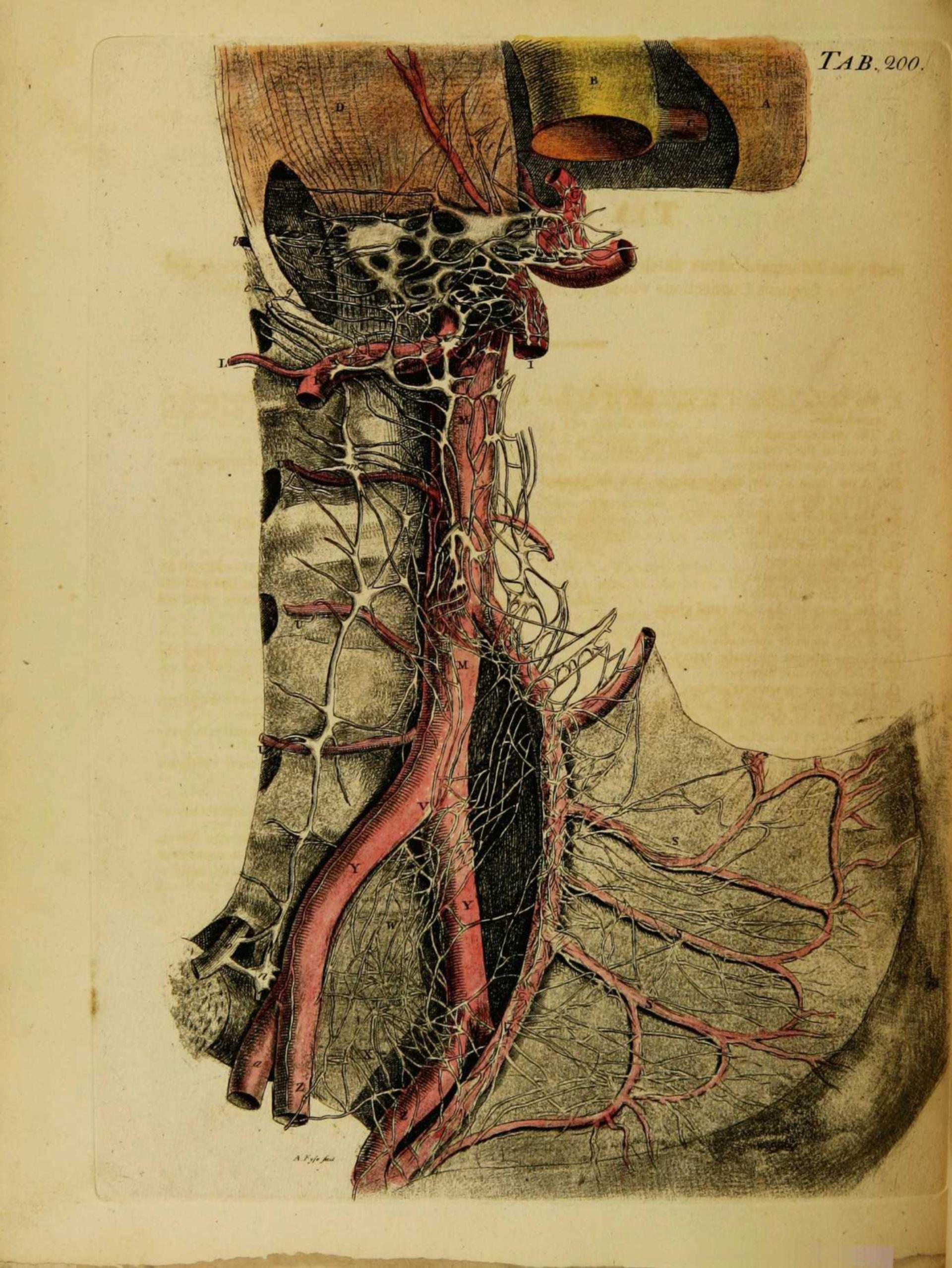 Arterielles Gefäßsystem