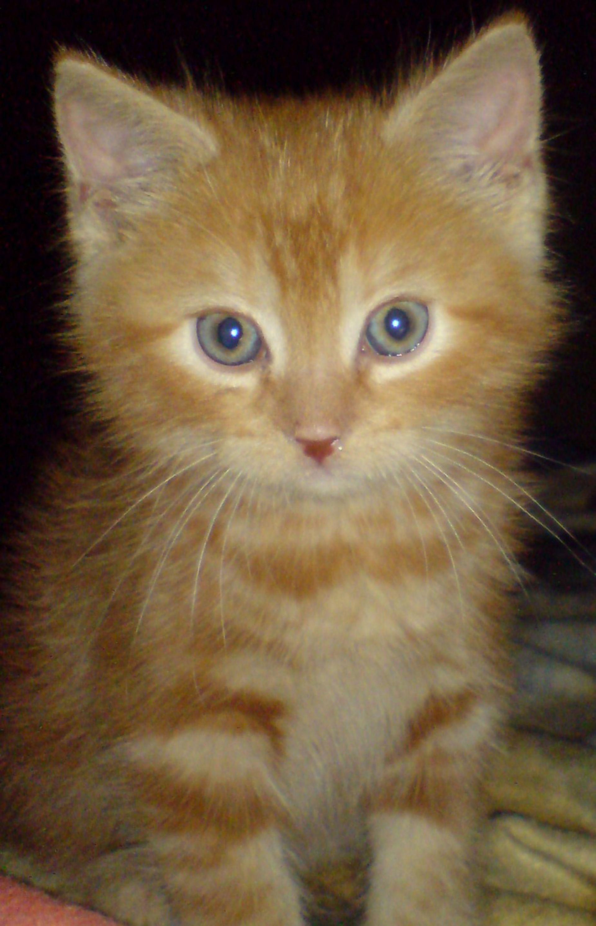 Katzenwelpe - 4 Wochen
