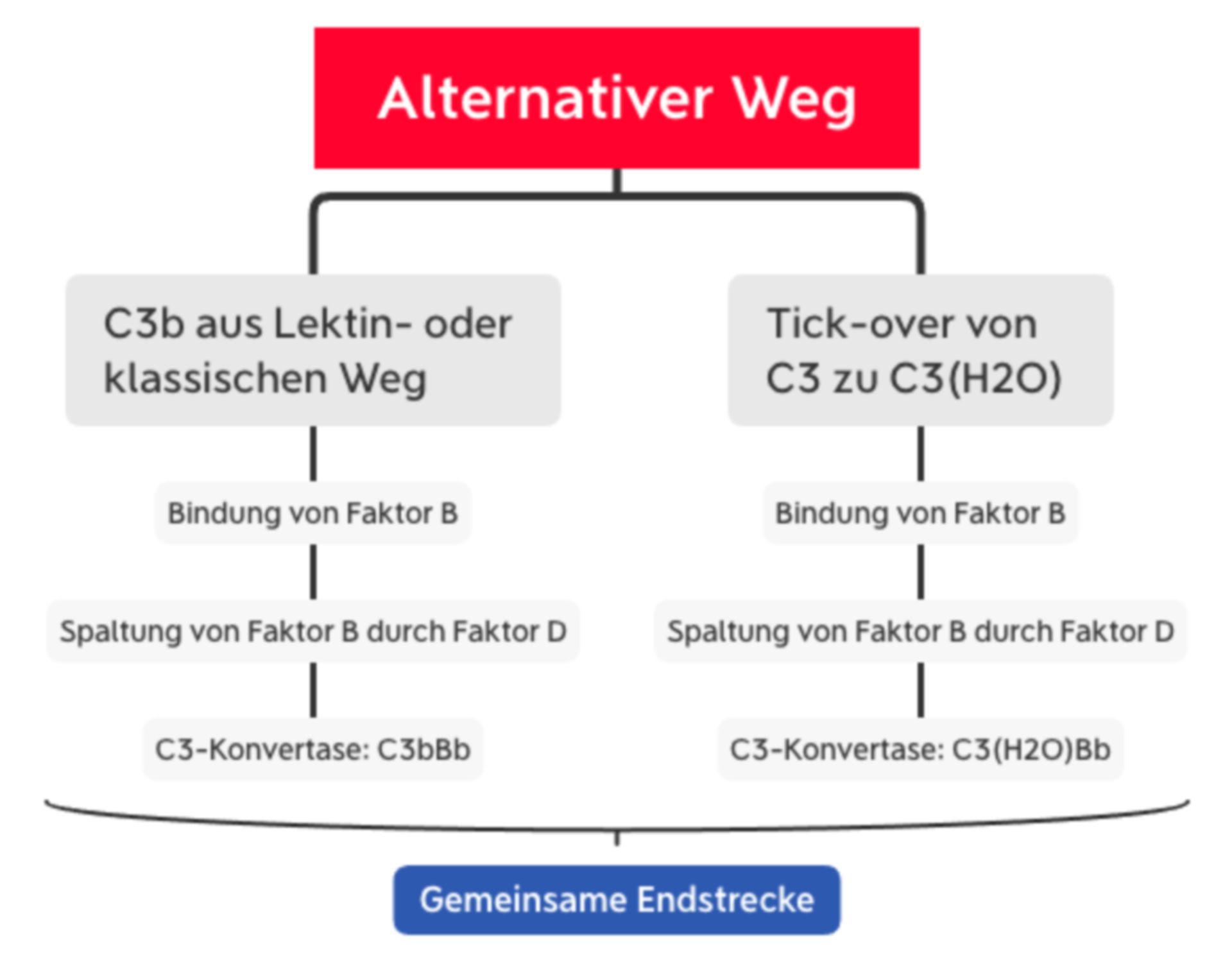 Komplementsystem: Alternativer Weg