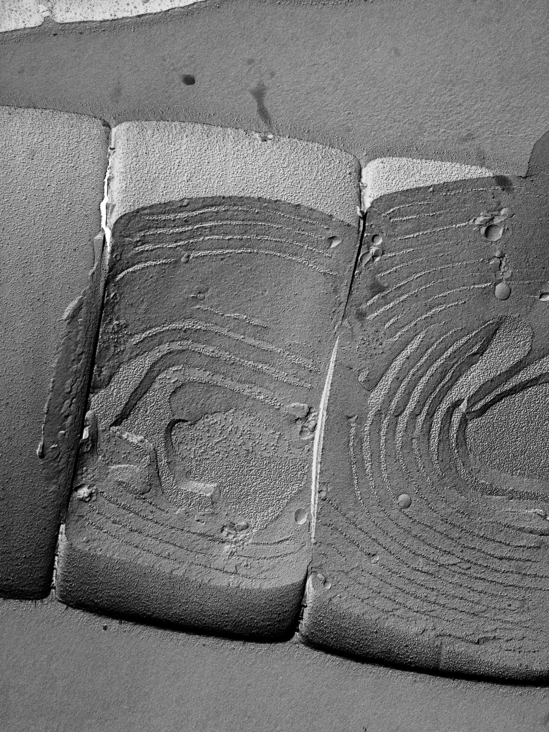 Oscillatoria tenuis (Thylakoid) - CIL:14687