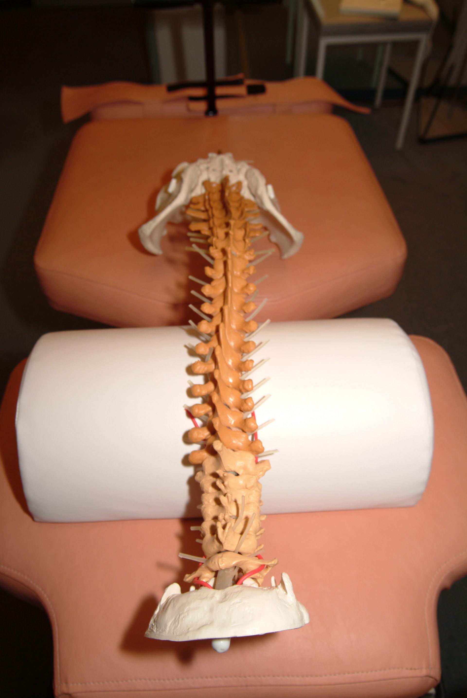 Modello della colonna vertebrale