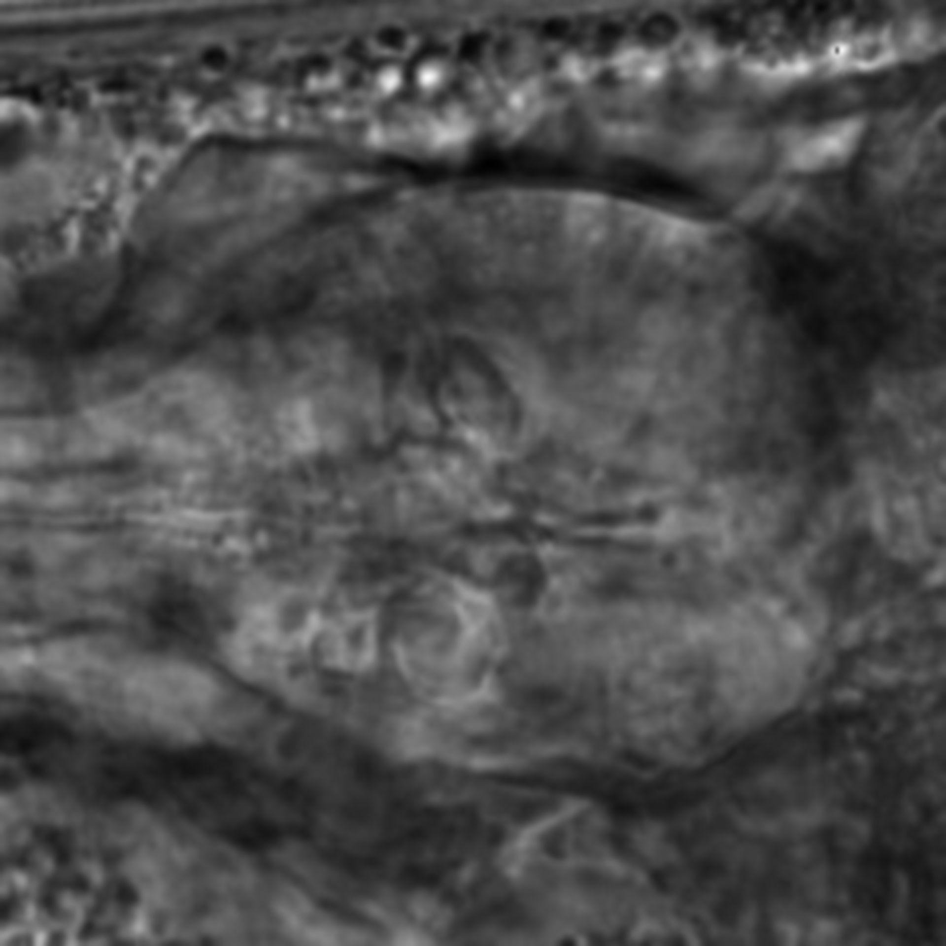 Caenorhabditis elegans - CIL:1946