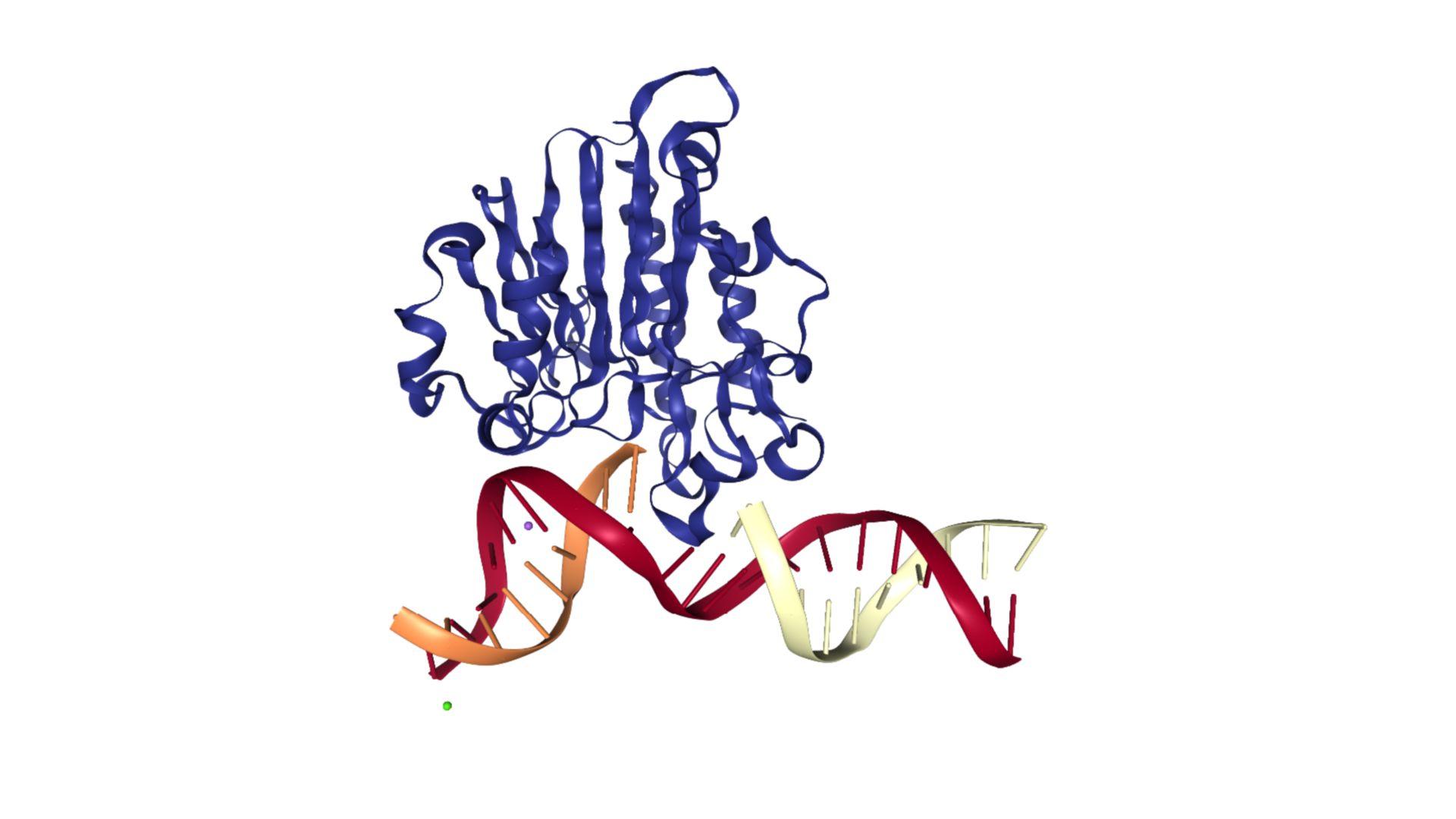 APE1 in Komplex mit DNA