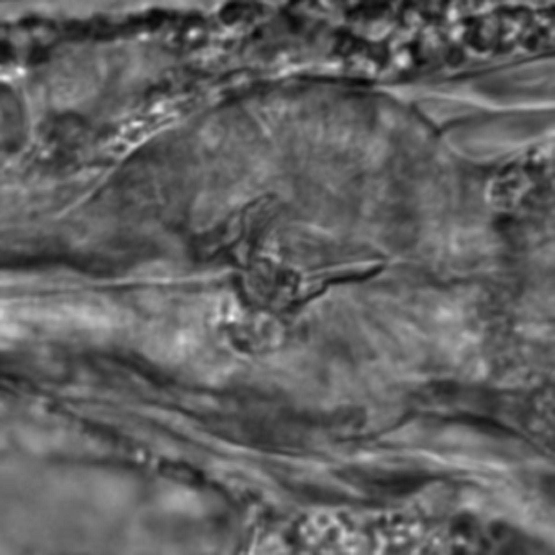 Caenorhabditis elegans - CIL:2053