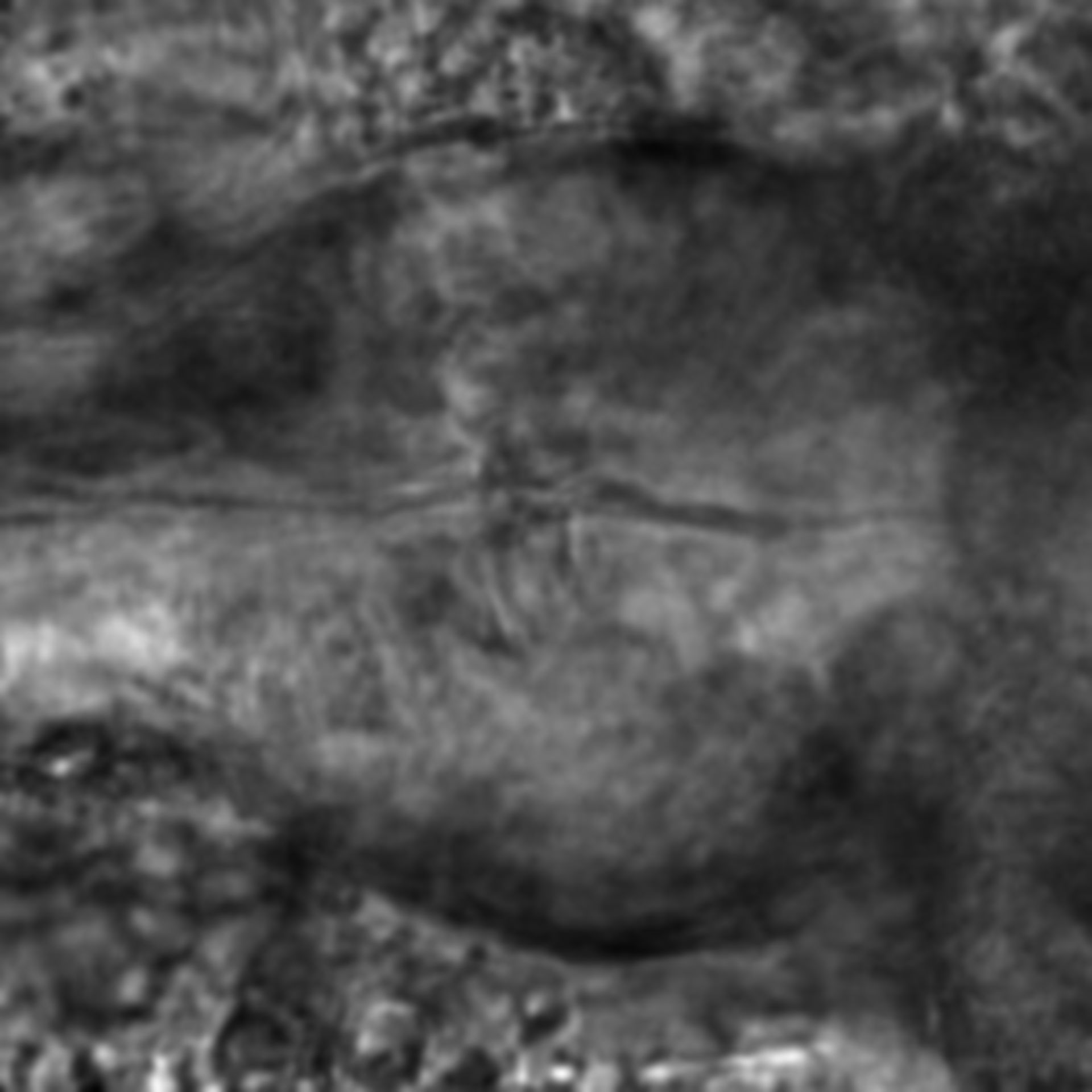 Caenorhabditis elegans - CIL:2131