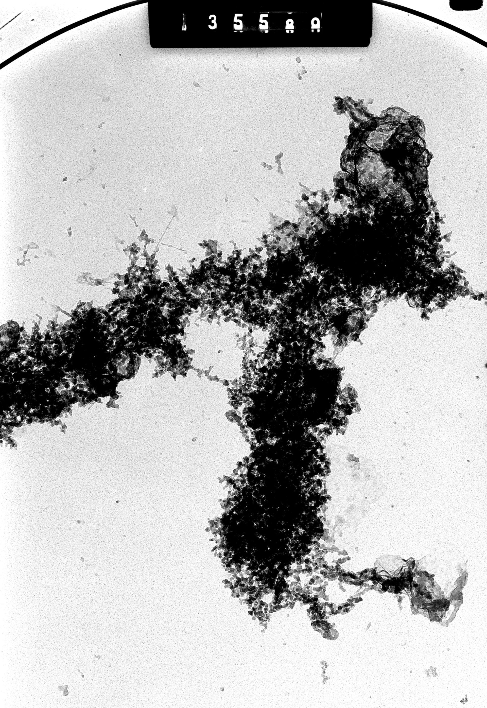 Cricetulus griseus (Chromosoma nuclear) - CIL:41715