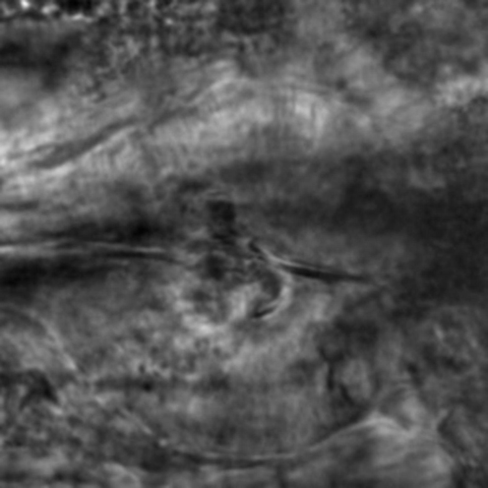 Caenorhabditis elegans - CIL:2240