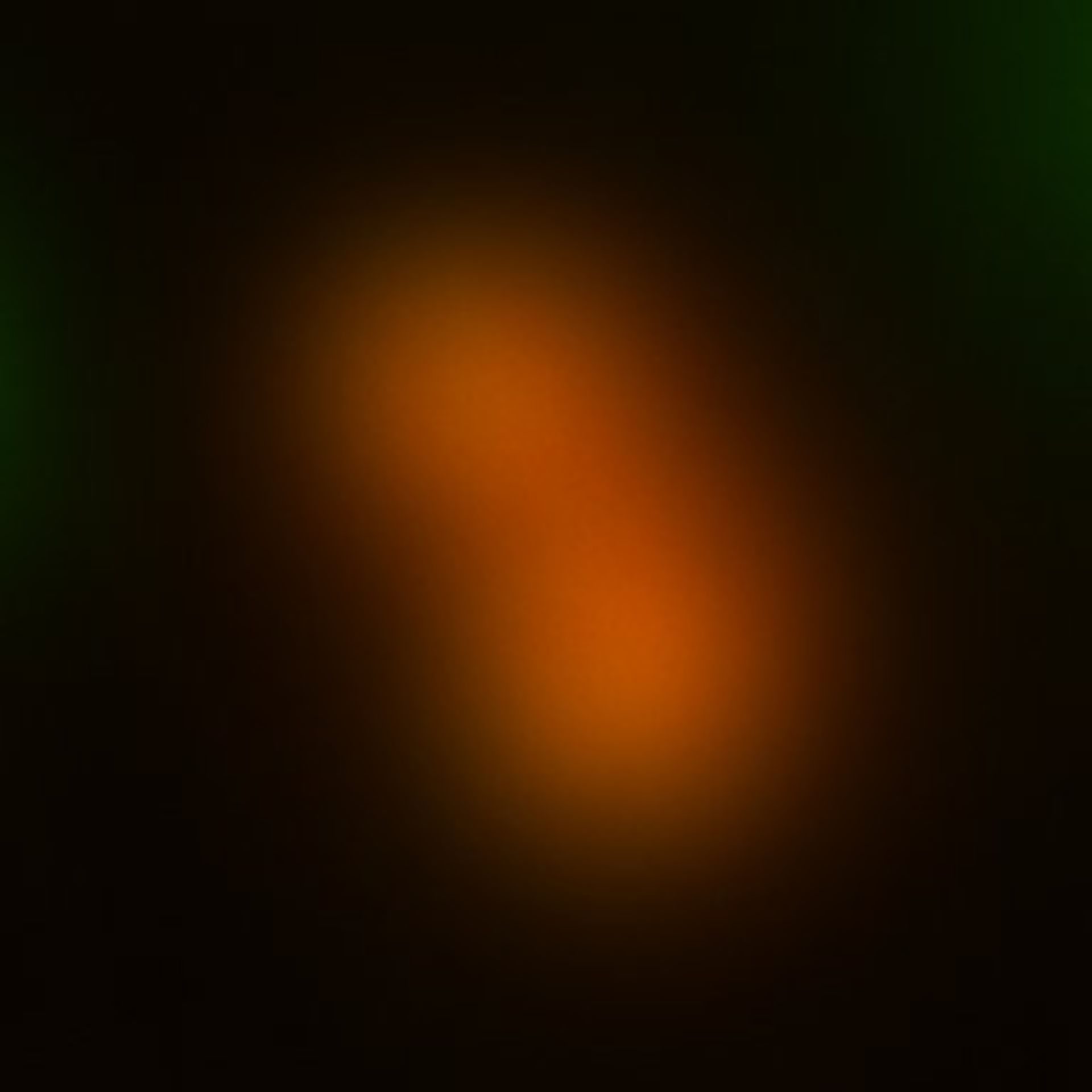 Toxoplasma gondii RH (Cortical microtubule) - CIL:10560